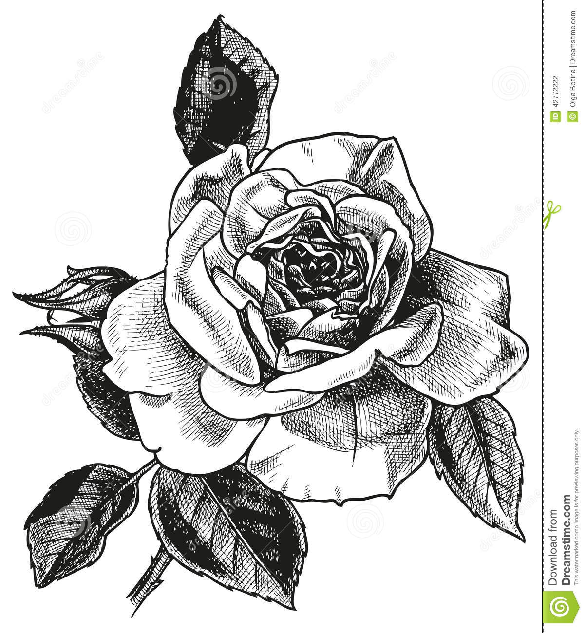 Dessin de main de rose illustration de vecteur illustration du fleur 42772222 - Dessins de rose ...