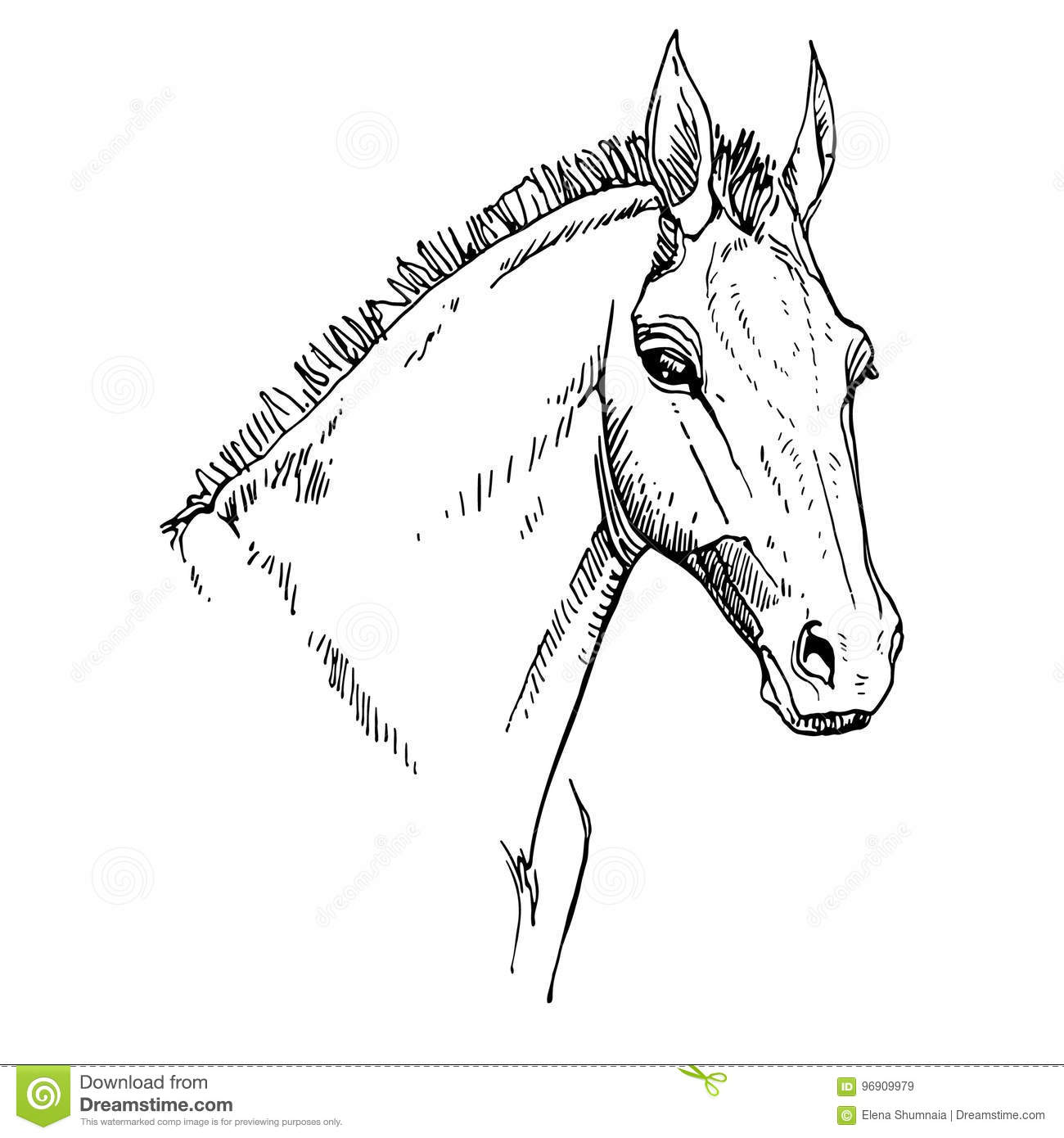 Dessin de t te de cheval illustration de vecteur illustration du type 96909979 - Dessin de tete de cheval ...