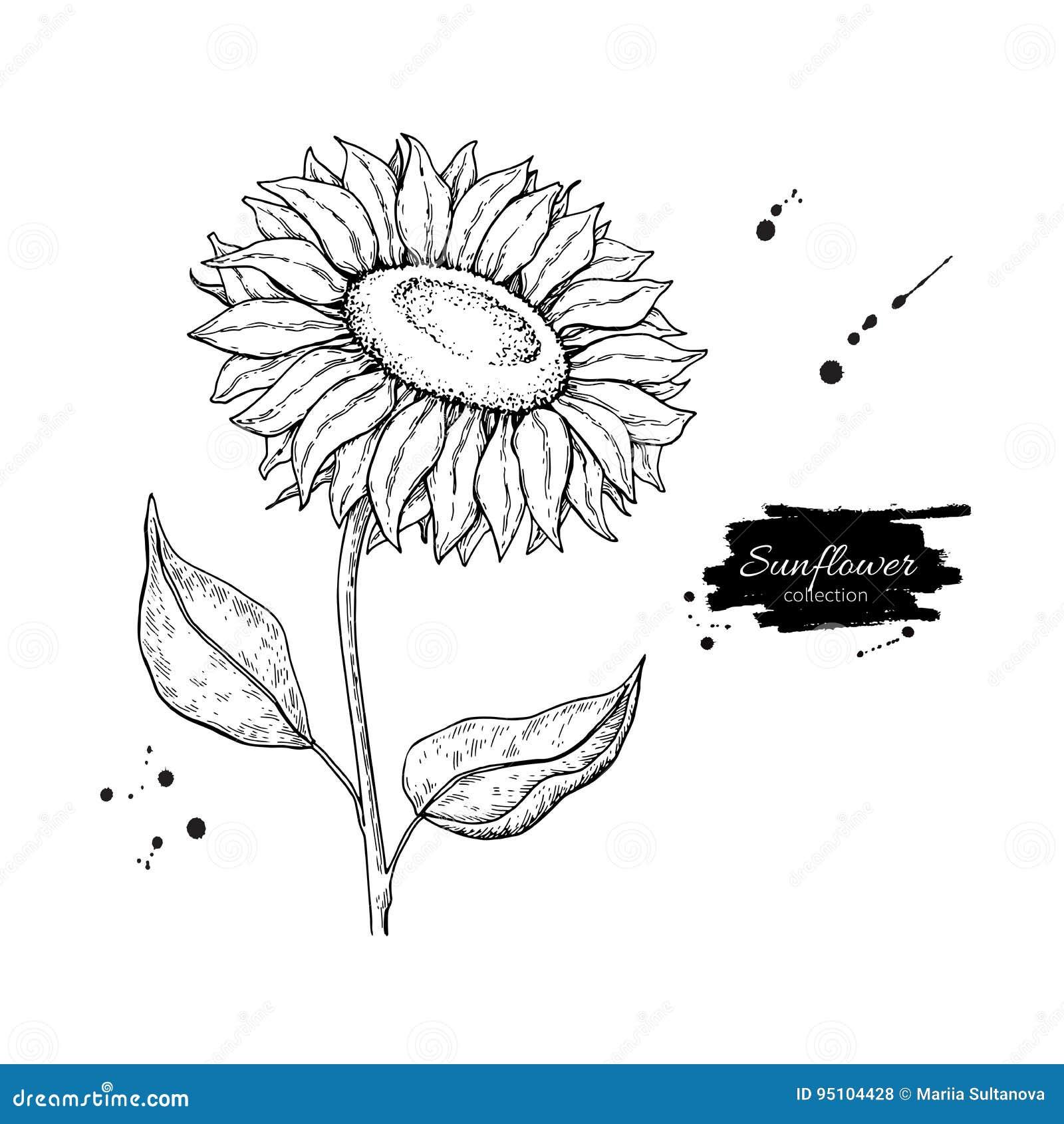 Dessin de vecteur de fleur de tournesol illustration tir e - Dessin de tournesol ...