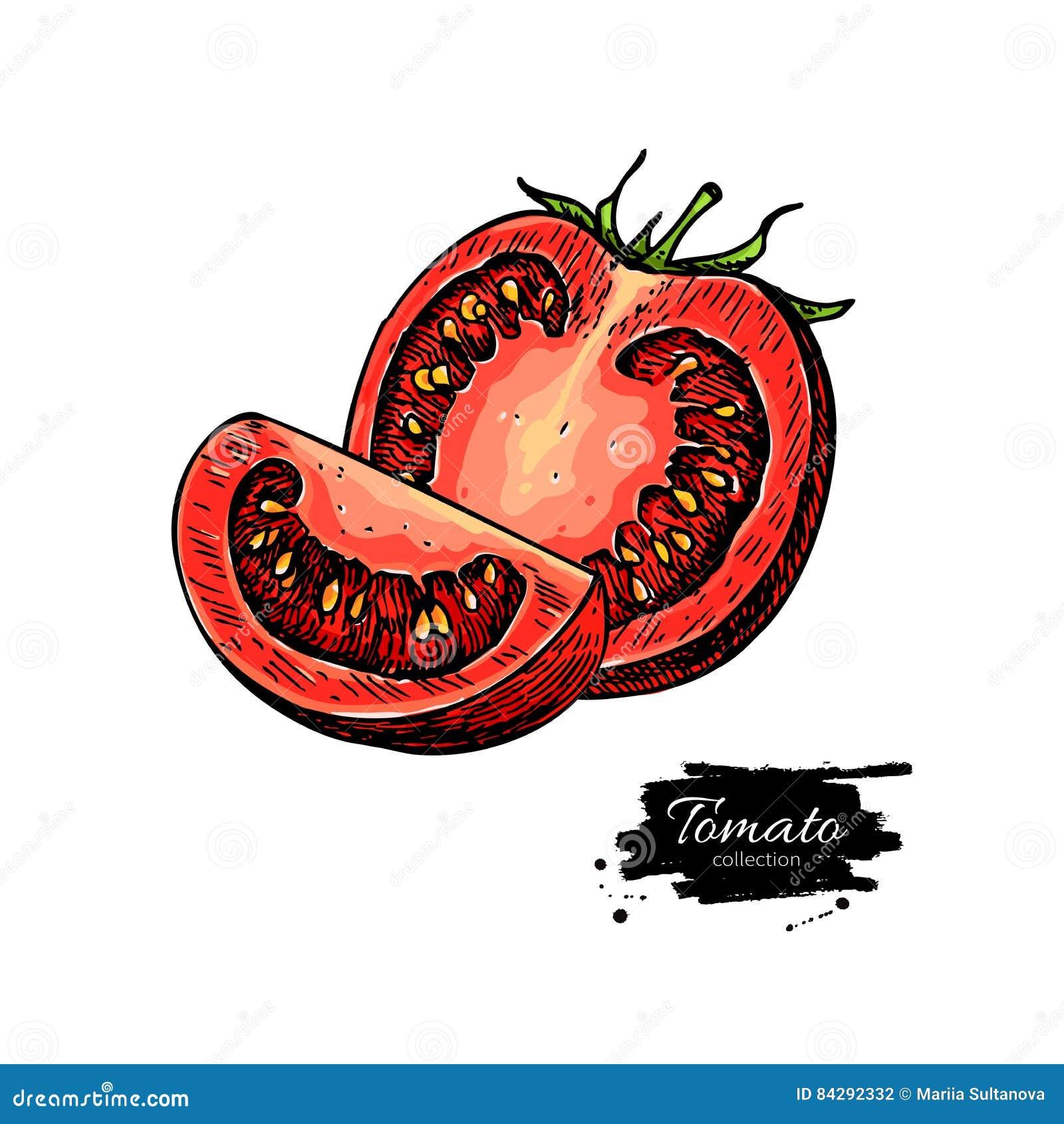 Dessin de vecteur de tomate tomate d 39 isolement et morceau d coup en tranches l gume - Dessin de tomate ...