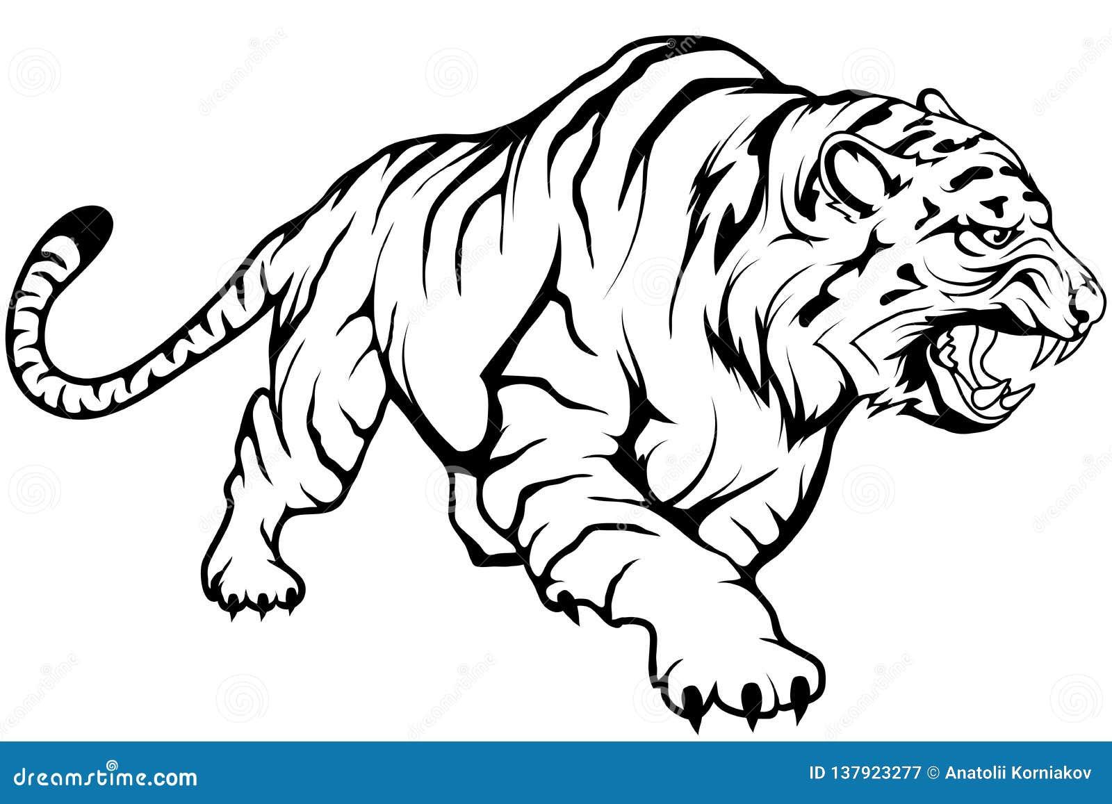 Tigre Sketch: Dessin De Vecteur De Tigre, Croquis De Dessin De Tigre