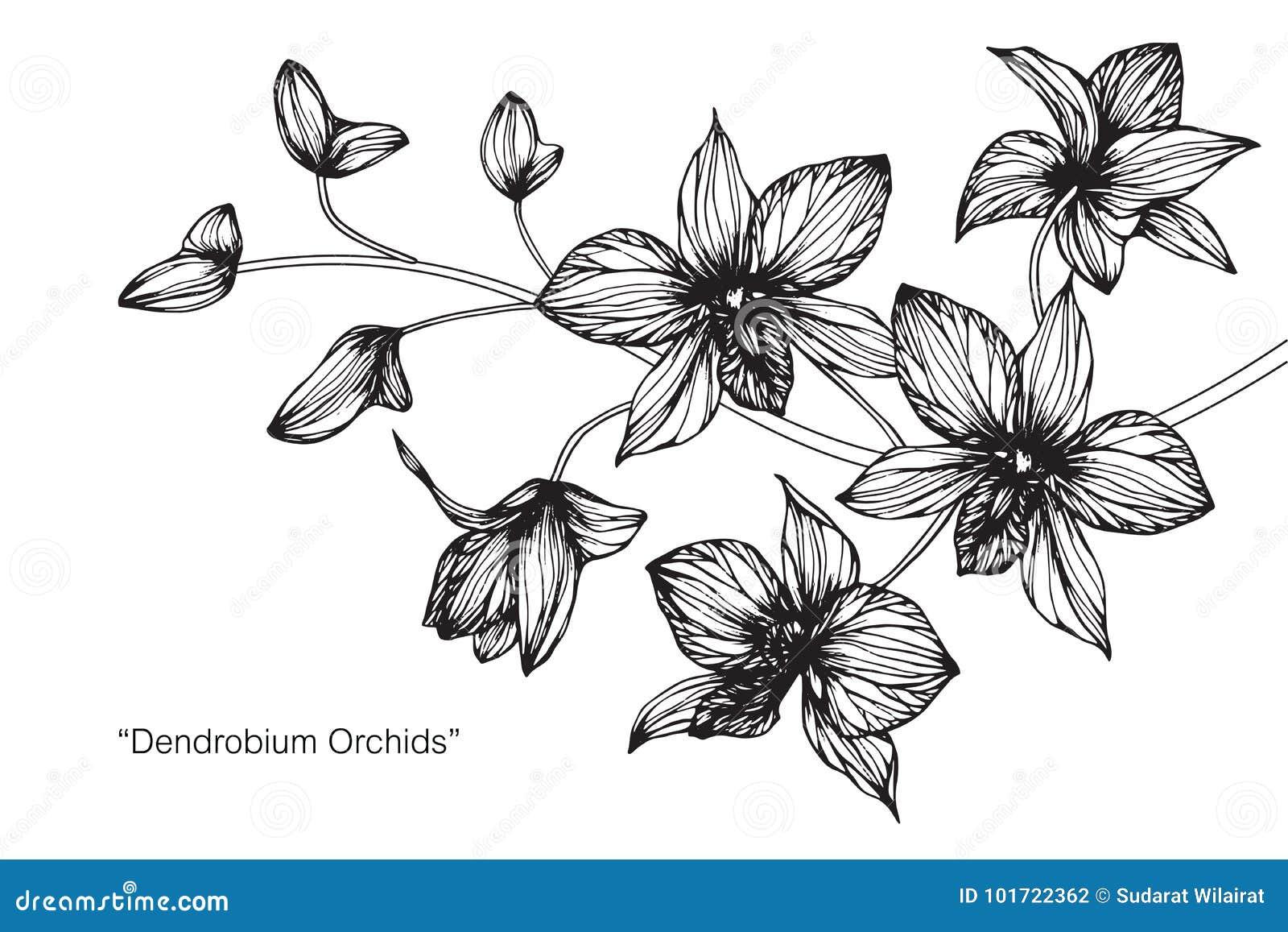 Dessin Et Croquis De Fleur D Orchidee Illustration Stock
