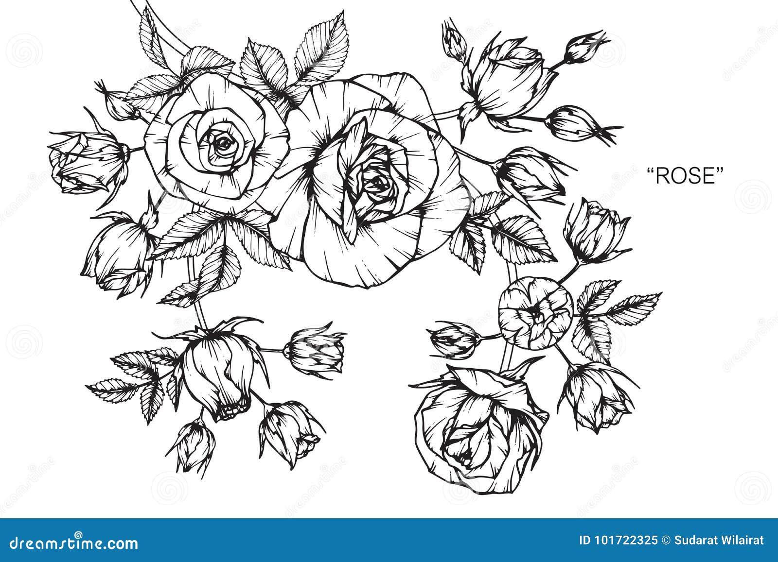 Dessin et croquis de fleur de rose illustration stock - Dessin fleur rose ...