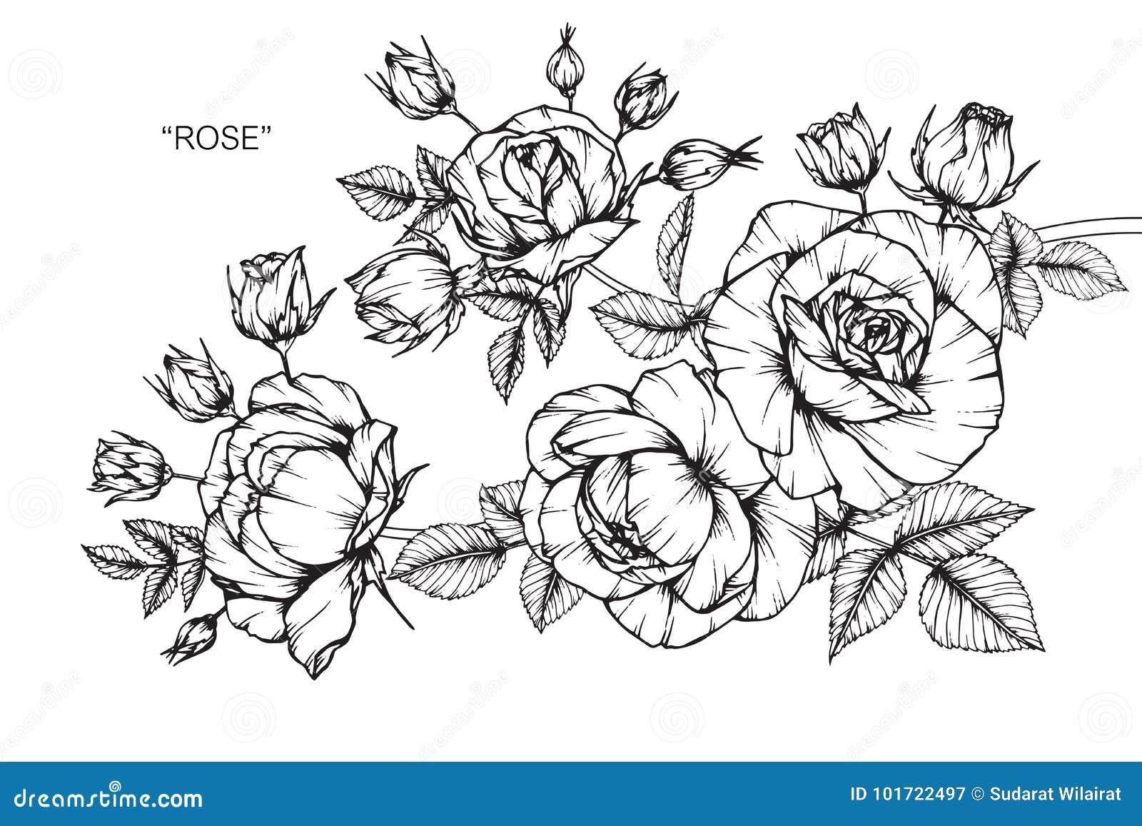 Dessin et croquis de fleur de rose illustration stock illustration du monochrome roses 101722497 - Fleur rose dessin ...