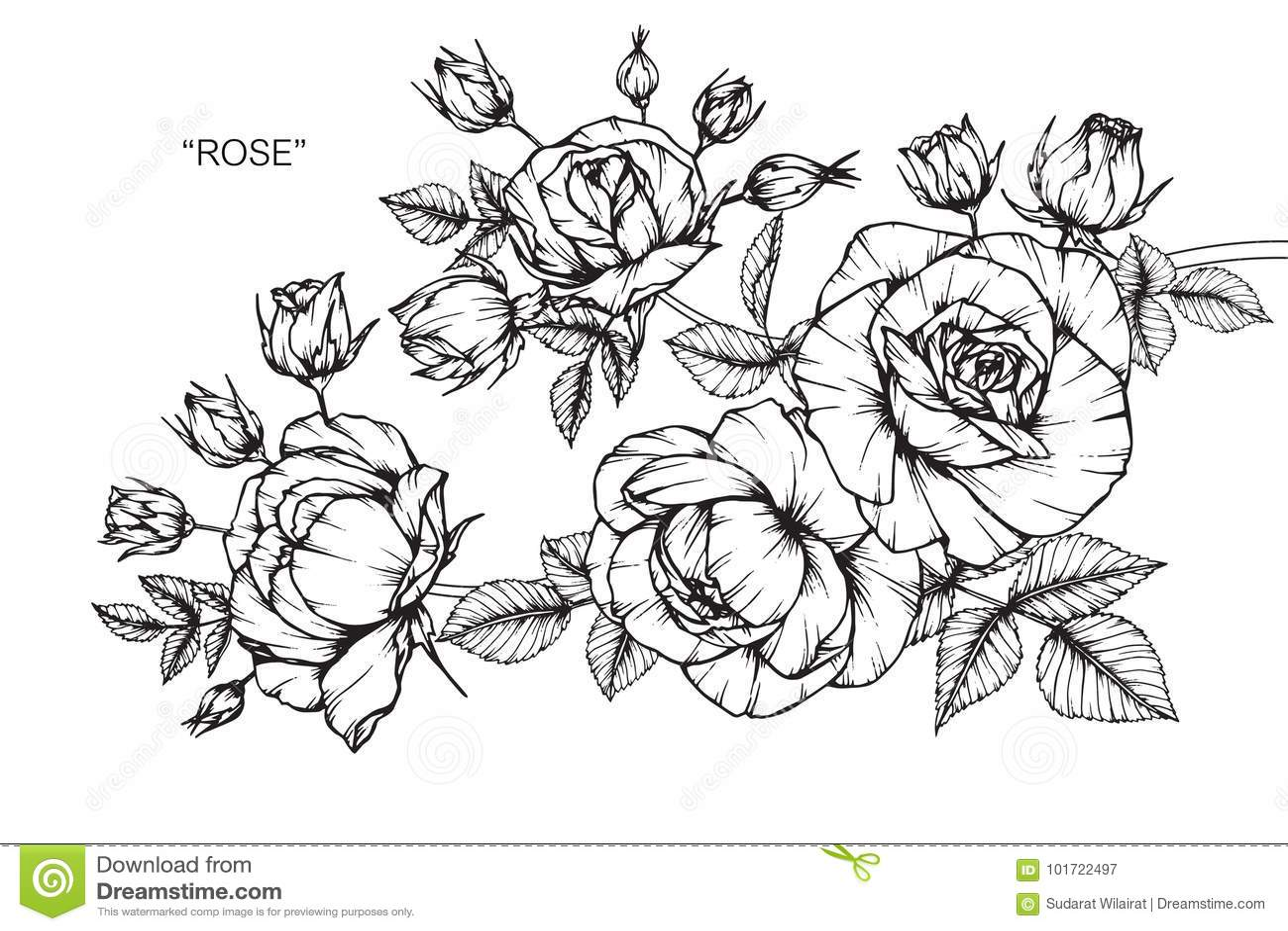 dessin et croquis de fleur de rose illustration stock illustration du monochrome roses 101722497. Black Bedroom Furniture Sets. Home Design Ideas