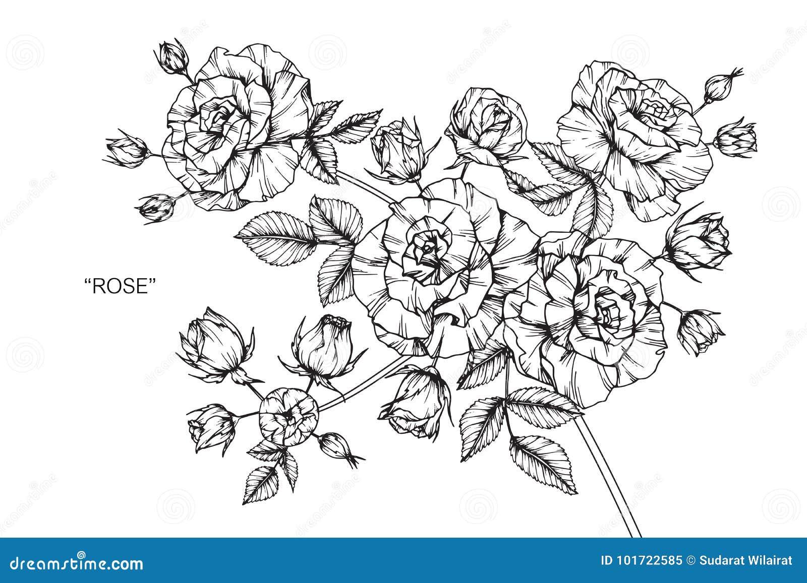 Dessin Et Croquis De Fleur De Rose Illustration Stock Illustration