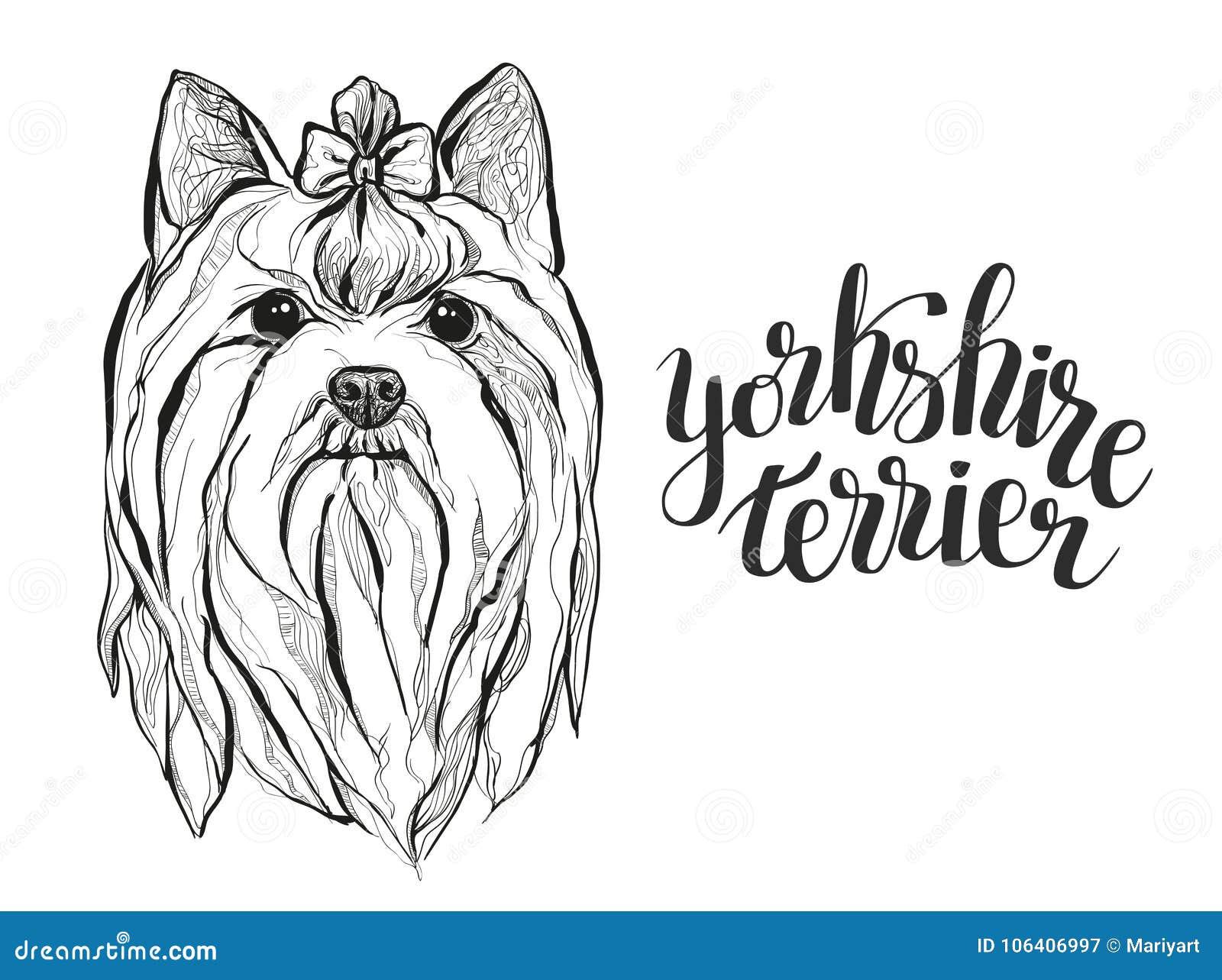 Dessin Graphique Du Chien Yorkshire Terrier Avec Le Lettrage