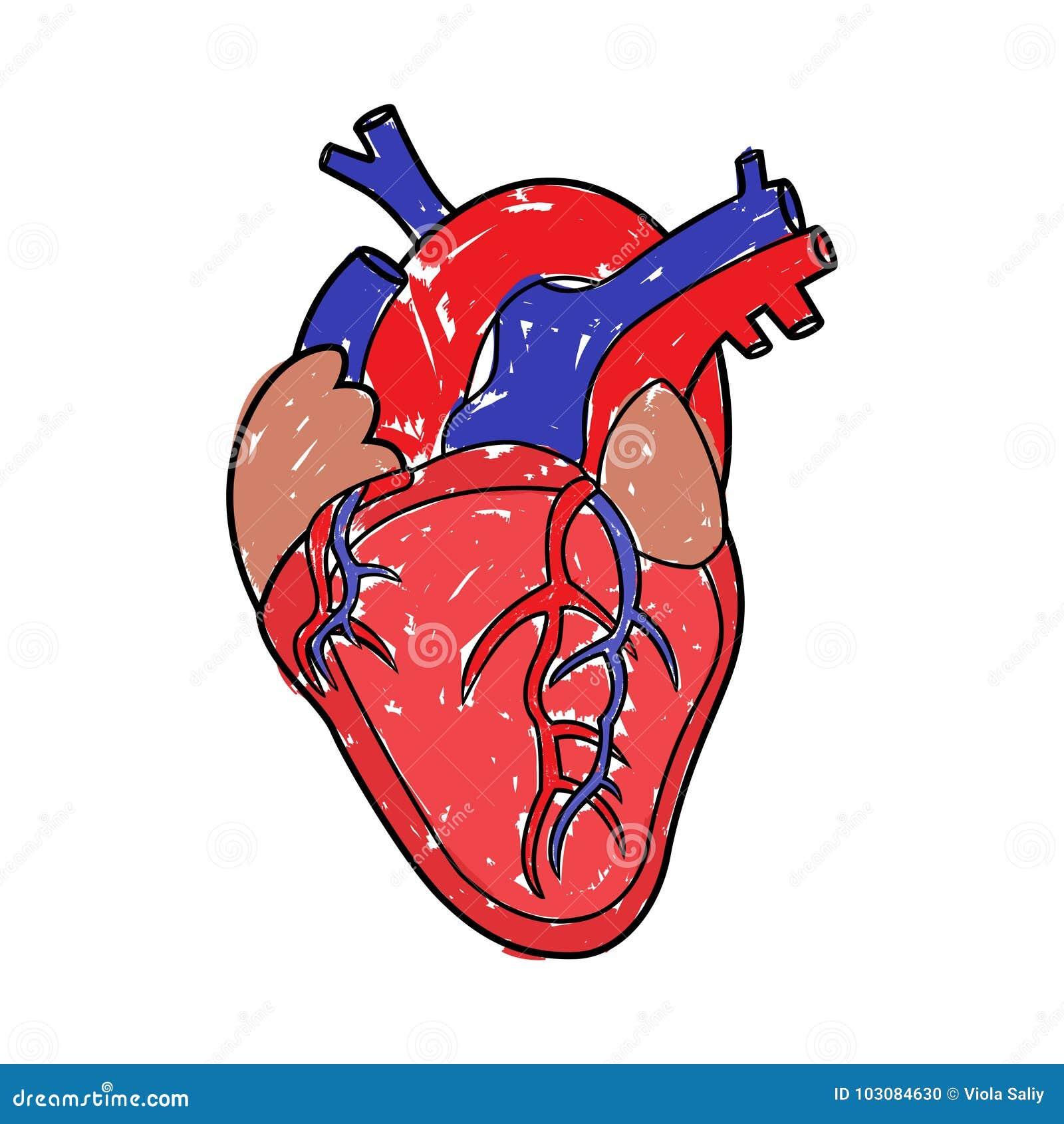 Dessin humain de coeur illustration de vecteur - Dessin du coeur humain ...