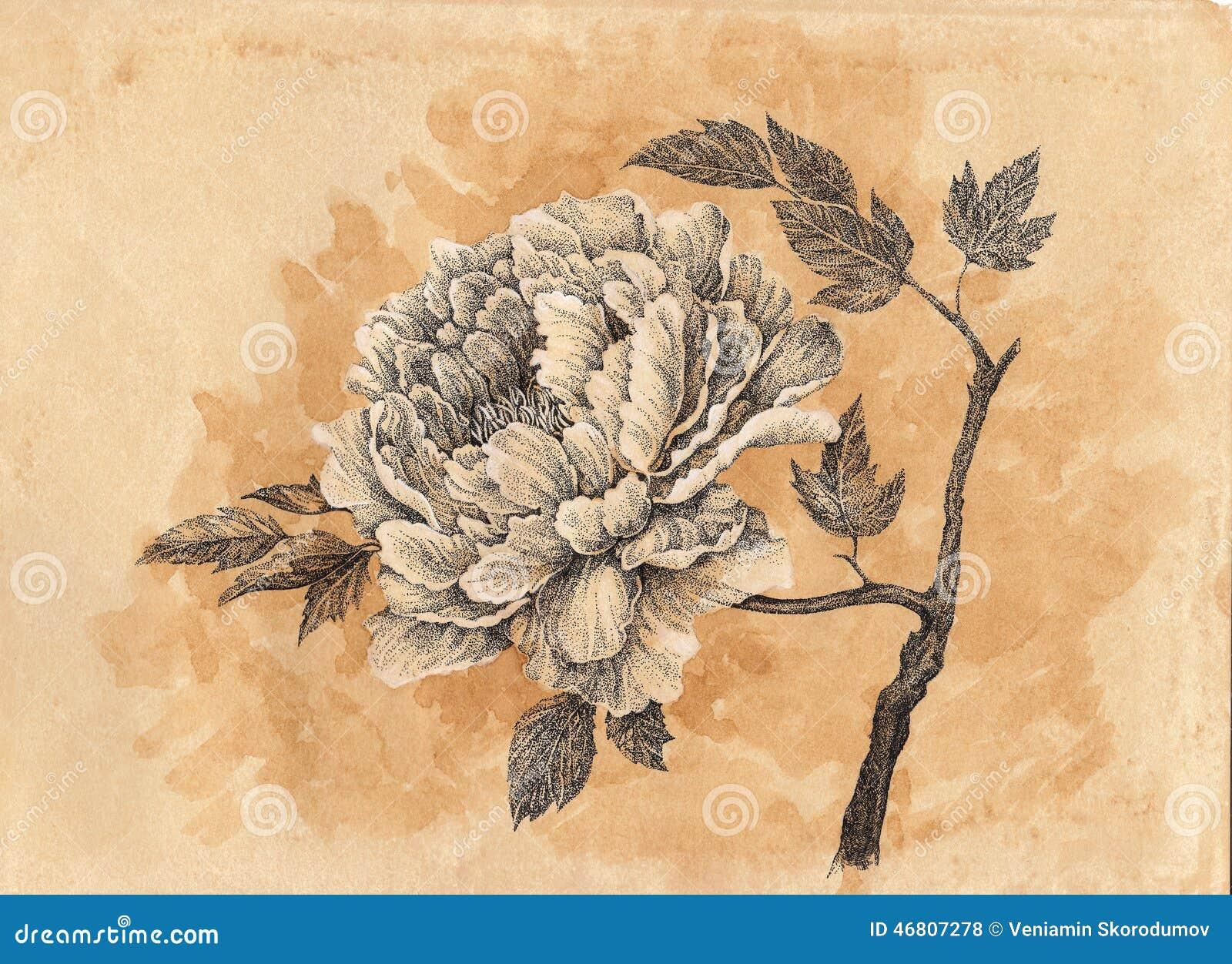 Dessin la main cardez fleur de pivoine illustration stock image 46807278 - Dessin de la main ...