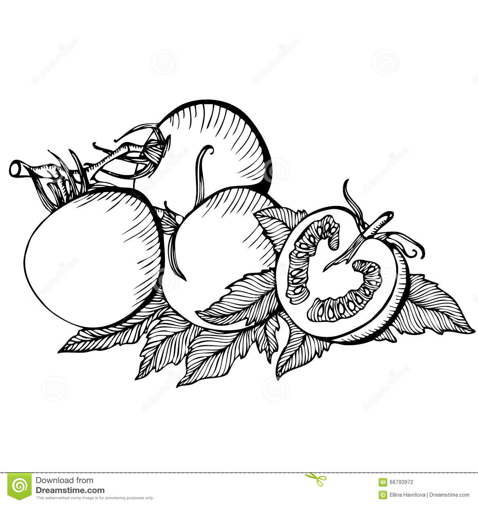 Dessin monochrome de vecteur des tomates illustration de vecteur illustration du vivacit - Dessin de tomate ...