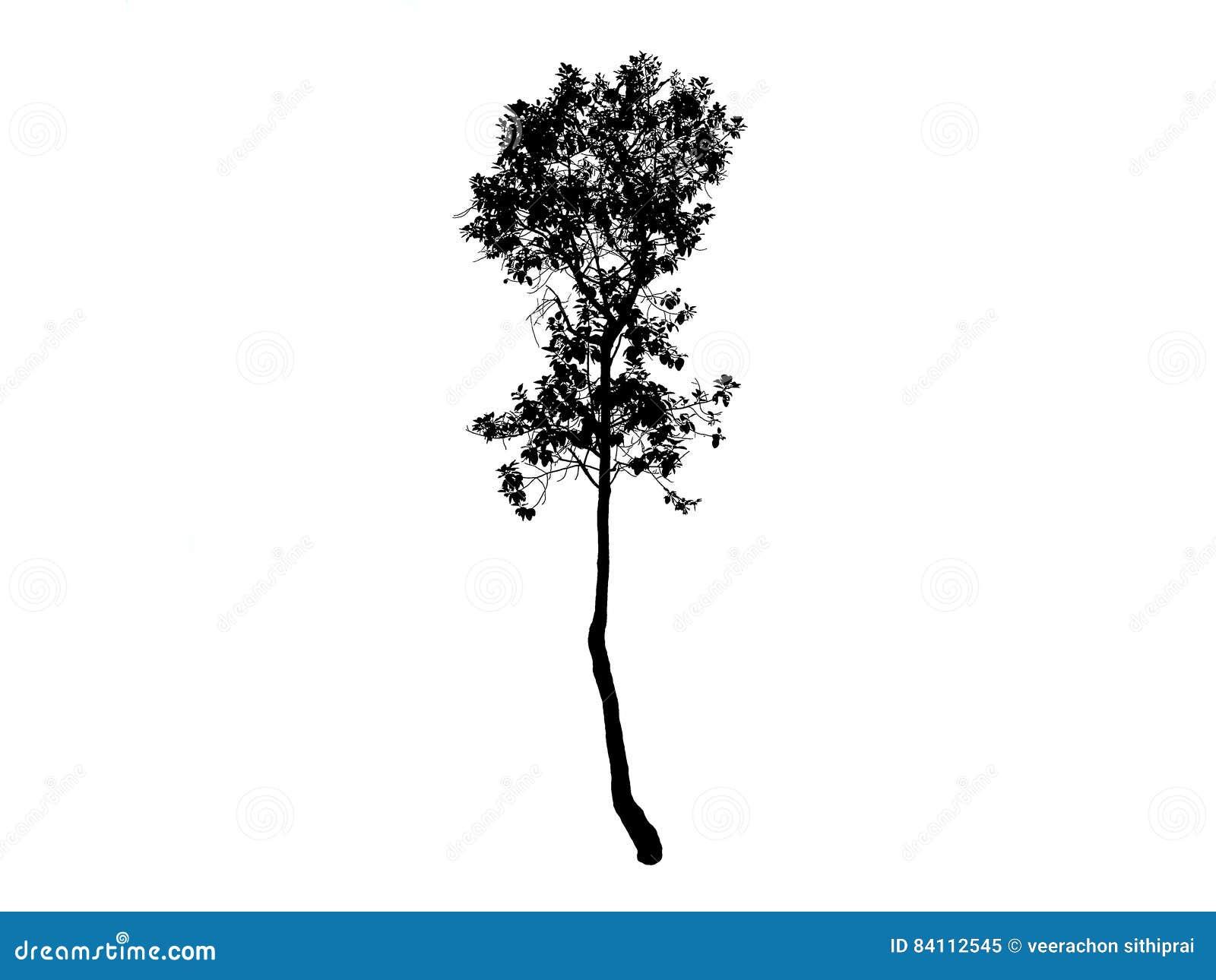 Dessin Noir D Arbre Illustration Stock Illustration Du Image 84112545