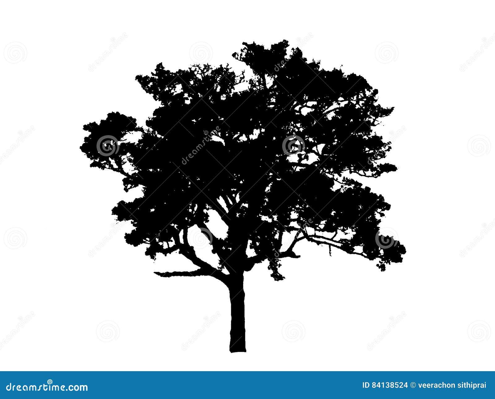 dessin noir d 39 arbre illustration stock illustration du jardin 84138524. Black Bedroom Furniture Sets. Home Design Ideas