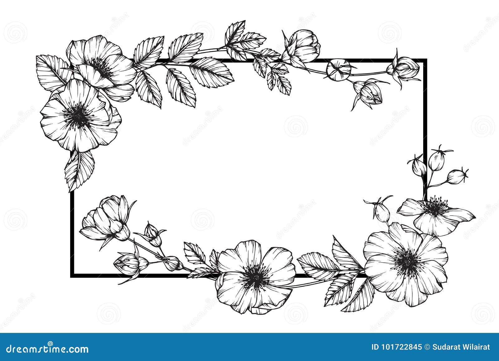 Dessin rose sauvage et croquis de fleur de cadre de fleur illustration stock illustration du - Dessins fleur ...