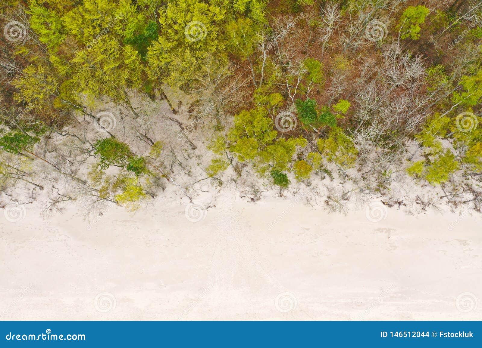Dessus aérien en bas de vue sur la plage propre blanche de sable et la forêt à feuilles caduques pendant le ressort