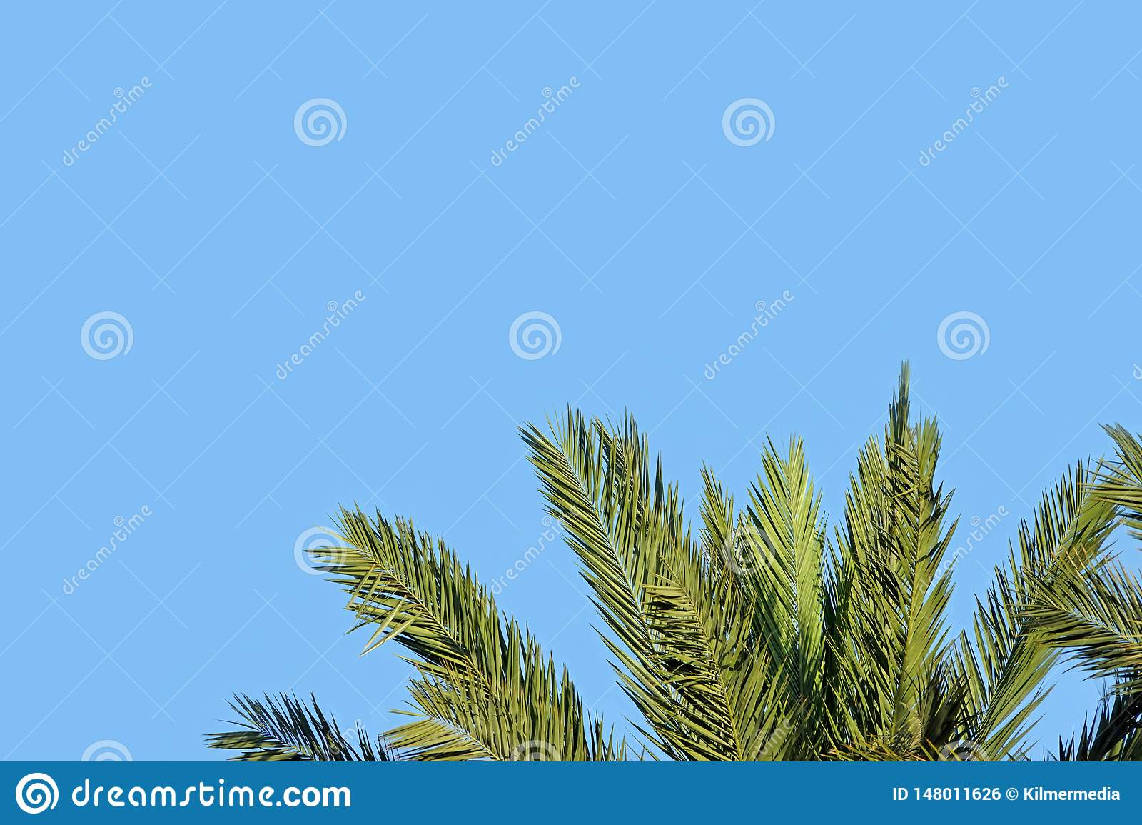 Dessus d un palmier avec l espace des textes dans le ciel bleu ci-dessus