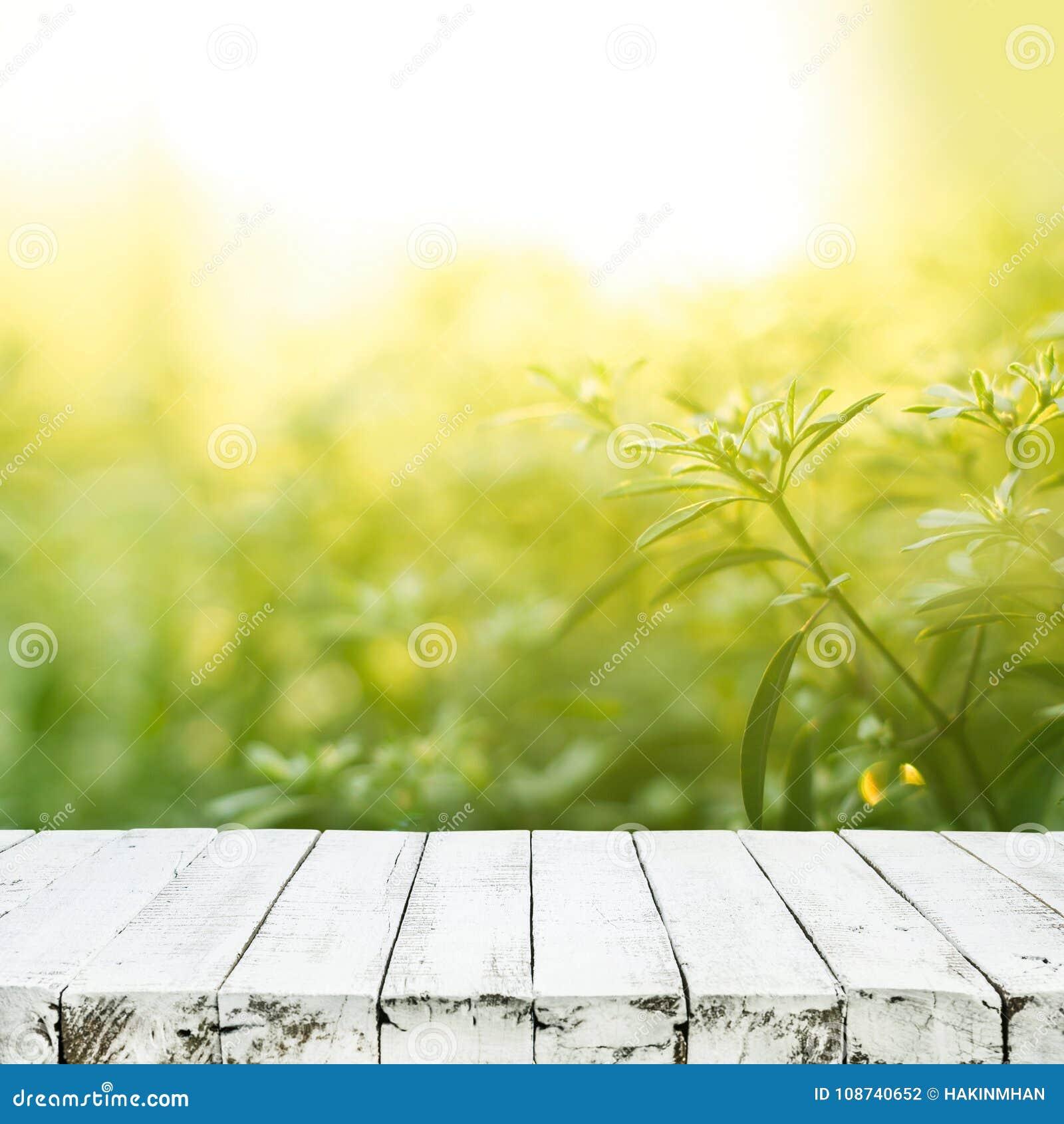 Dessus De Table En Bois Blanc Vide Sur Le Jardin D\'arbre De ...