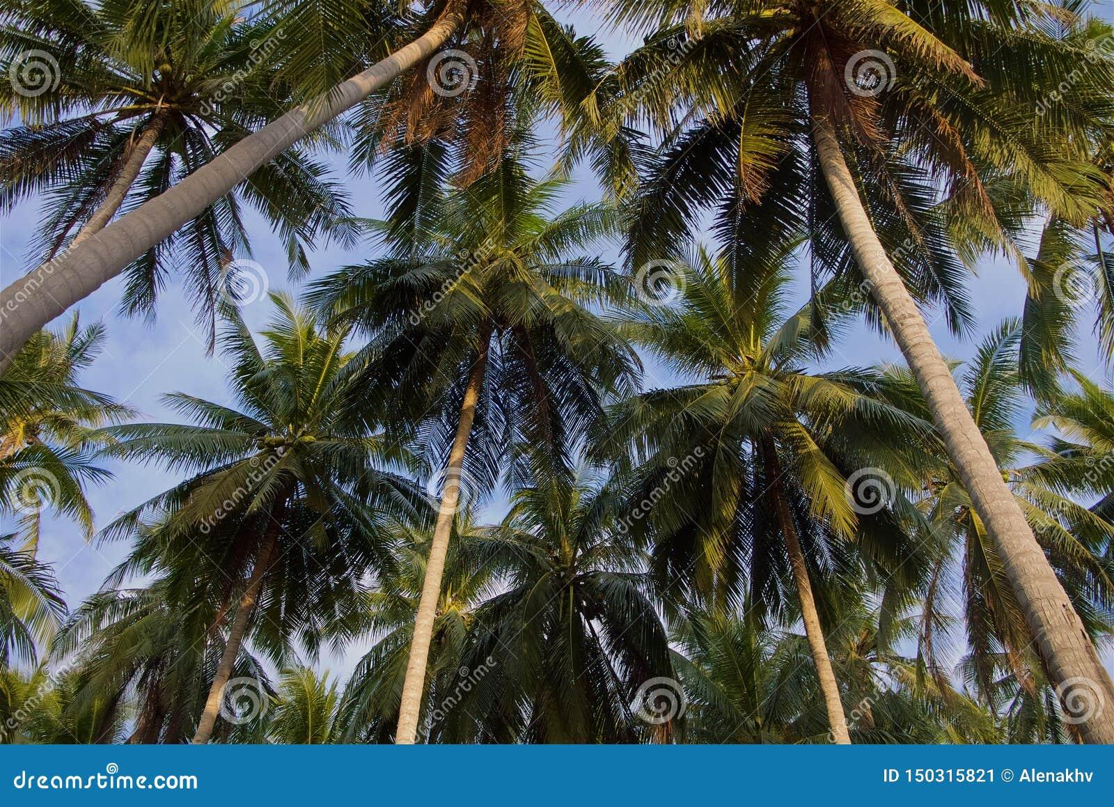Dessus tropicaux de palmier dans la lumière de coucher du soleil