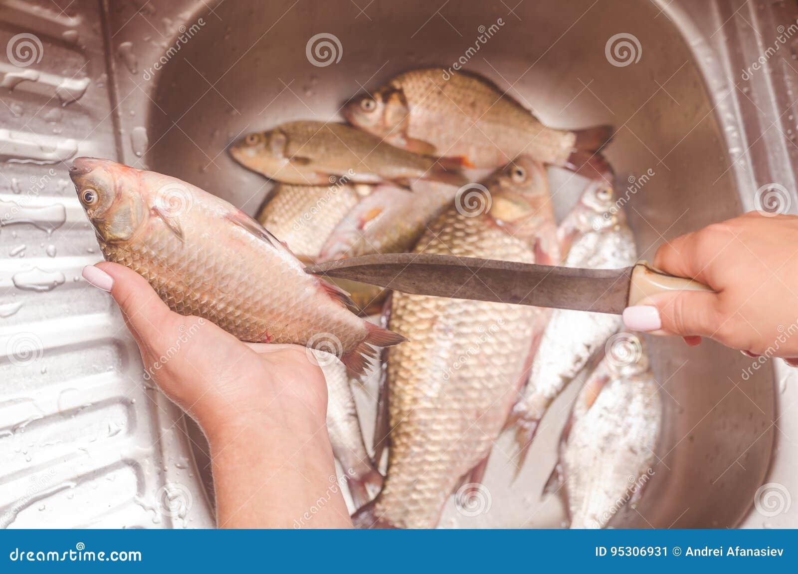 Destripamiento Y Limpieza De Pescados Sobre El Fregadero Imagen de ...