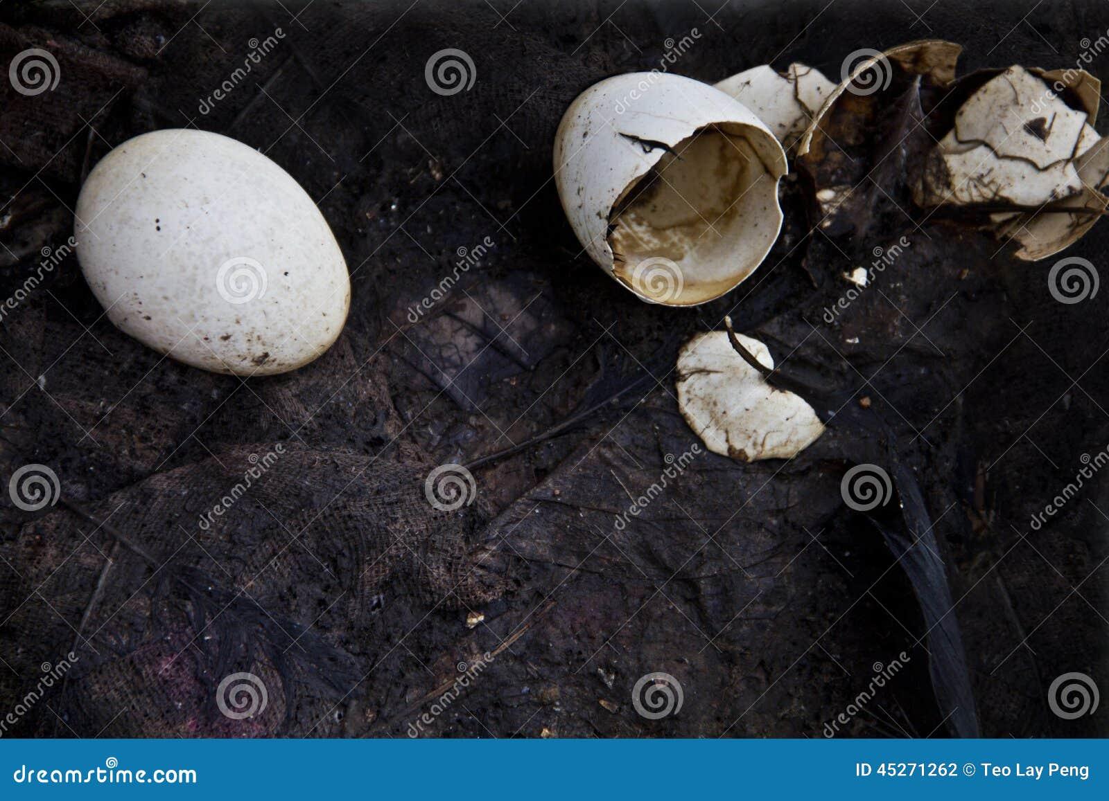 Destroy eggs