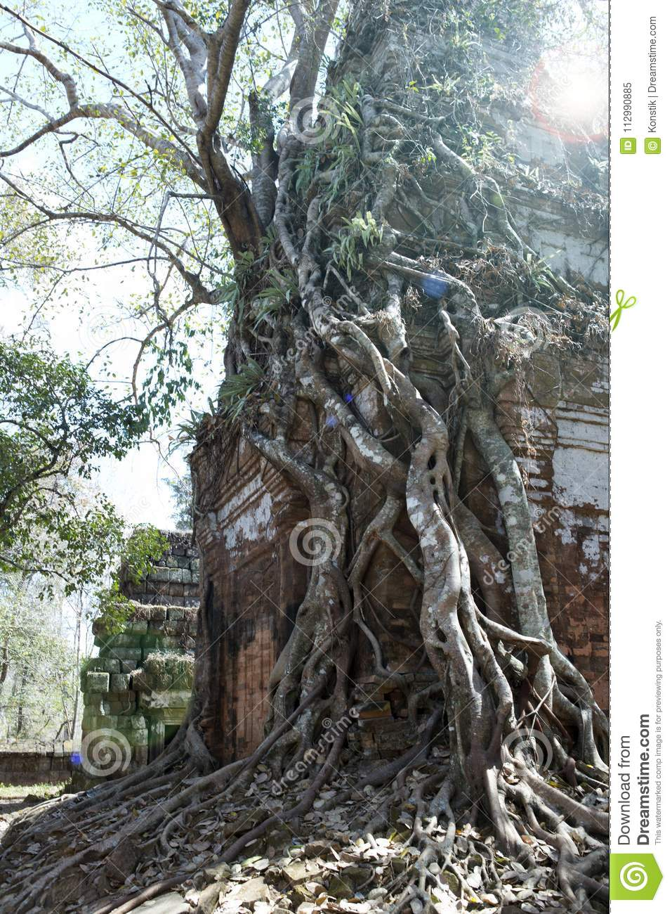 Destroyed covered with roots of trees temple Prasat Chrap in the Koh Ker temple complex, Siem Reap, Cambodia