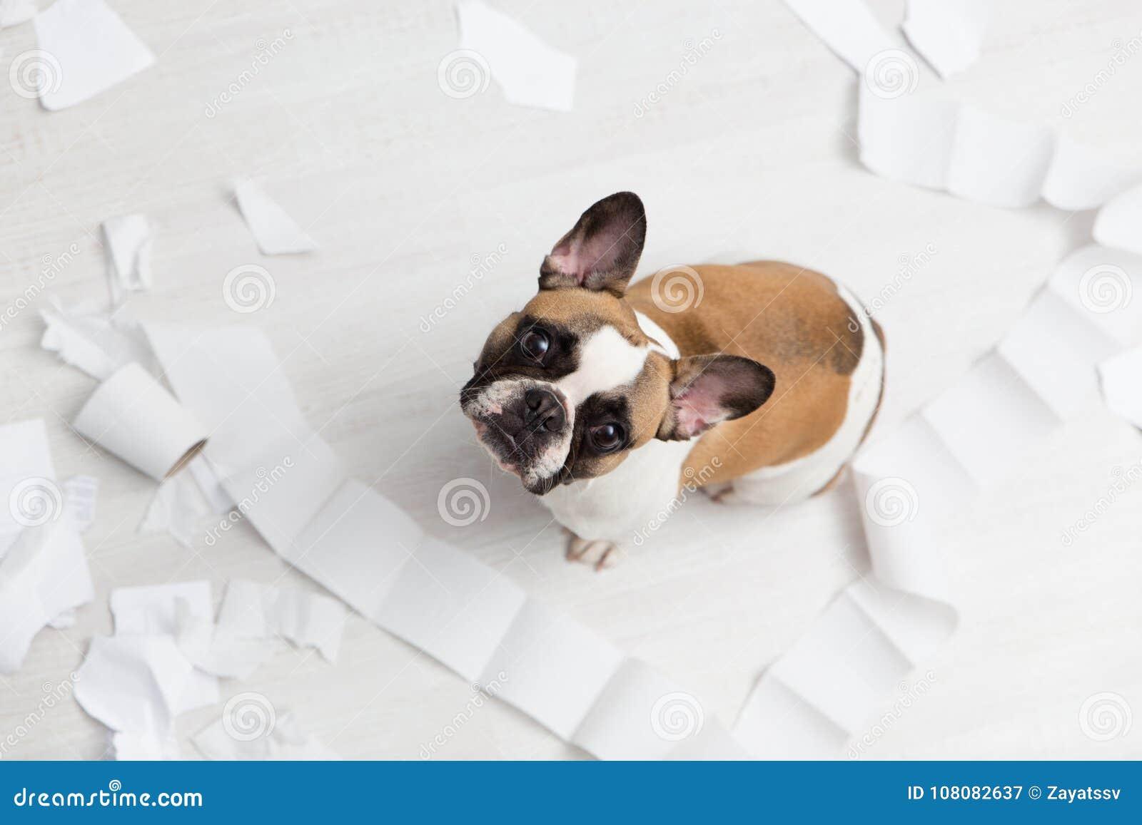 Destruição home do animal de estimação no assoalho branco do banheiro com alguma parte de papel higiênico Foto abstrata dos cuida