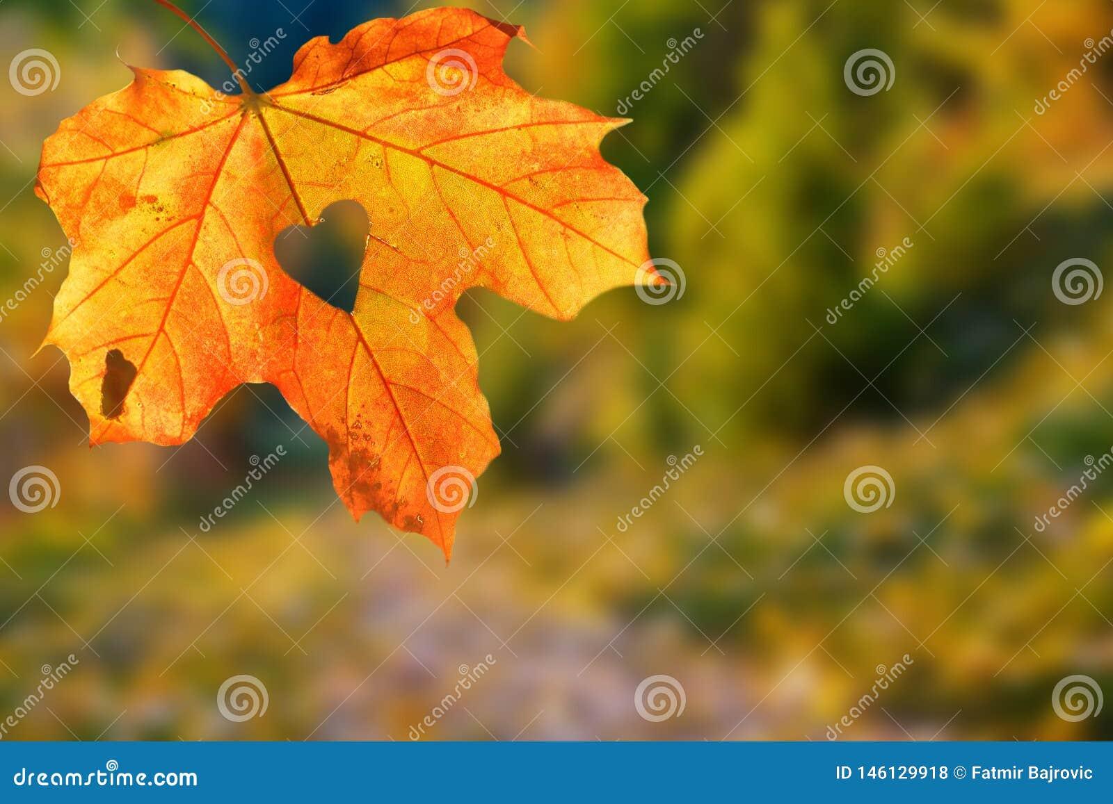Det är en mycket trevlig detalj i natur Ett stort orange blad med ettformat hål på det upp som är nära Höstlandskap i bakgrunden