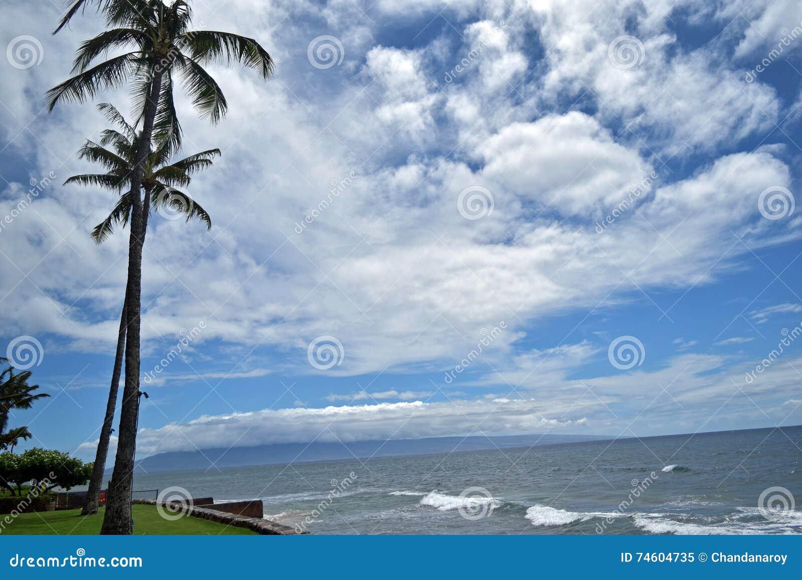 Det blå havet och himmel med att svänga gömma i handflatan längs den västra Maui's berömda Kaanapali stranden, Hawaii, USA