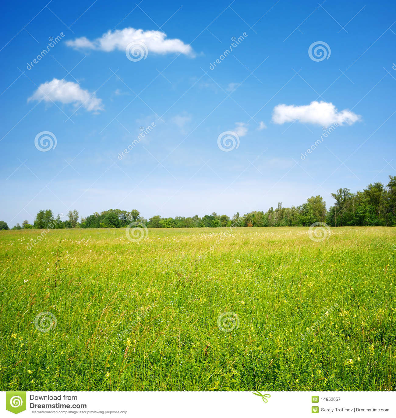 Det blåa fältet blommar skyen