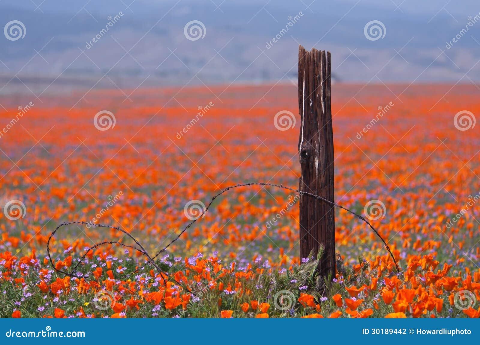 Brutet staket och wild blommor