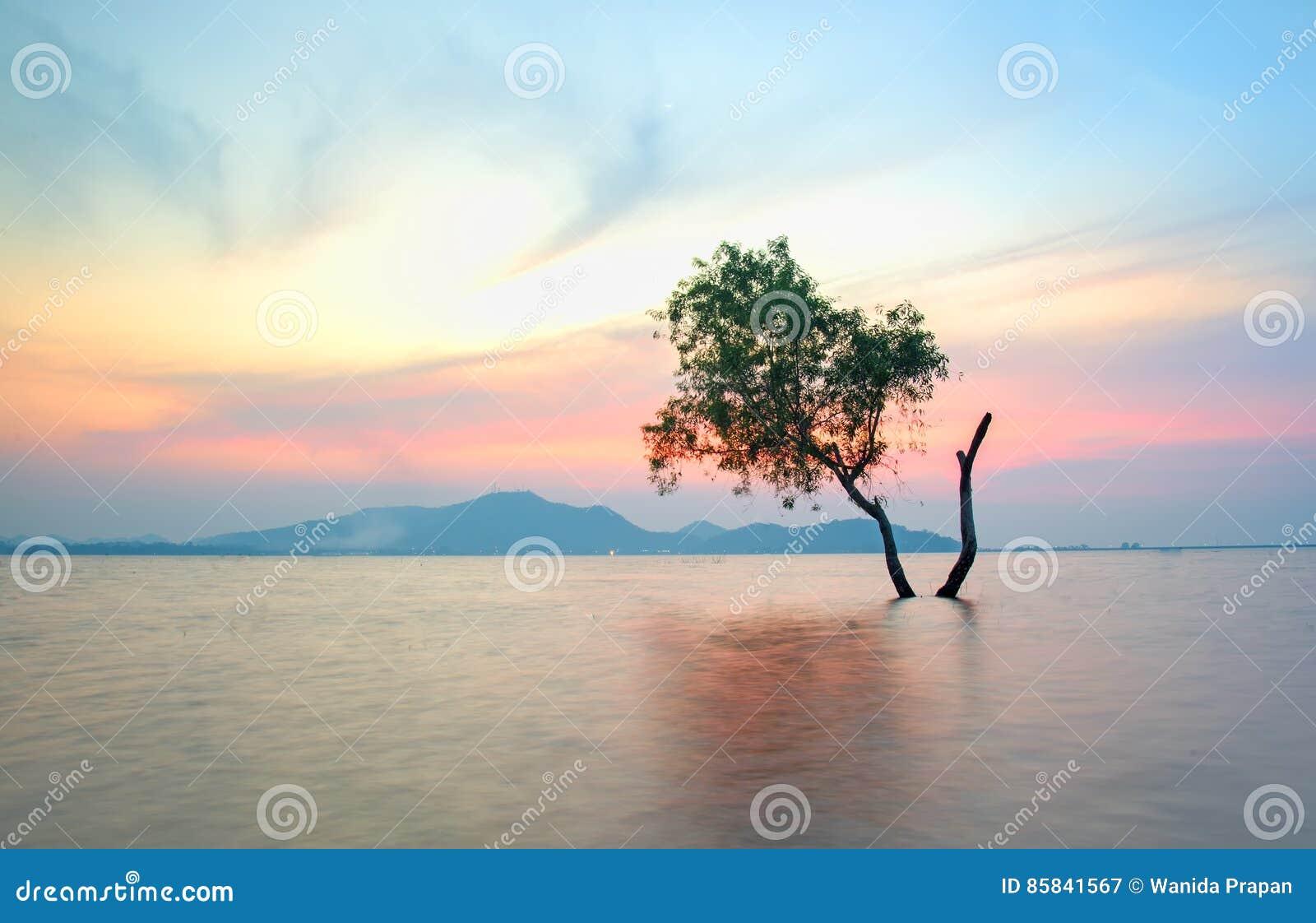 Det ensamma vid liv trädet är i floden
