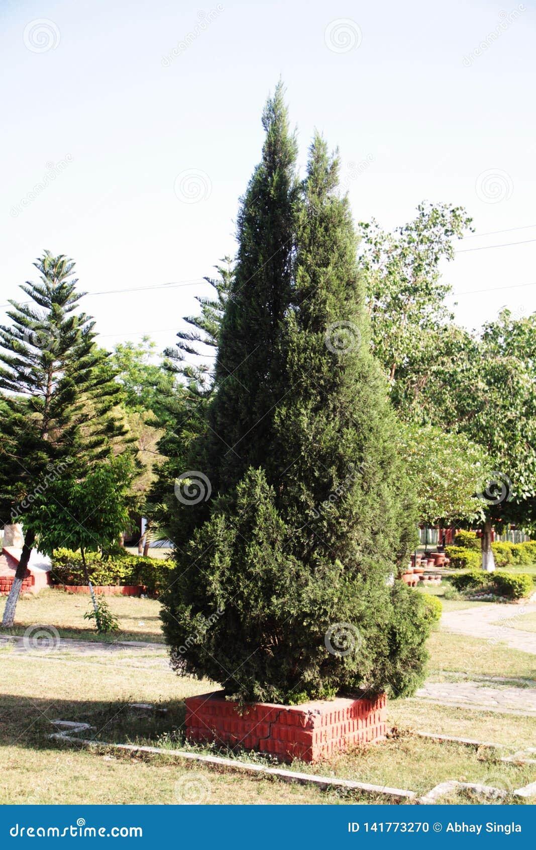 Det gröna trädet för jul