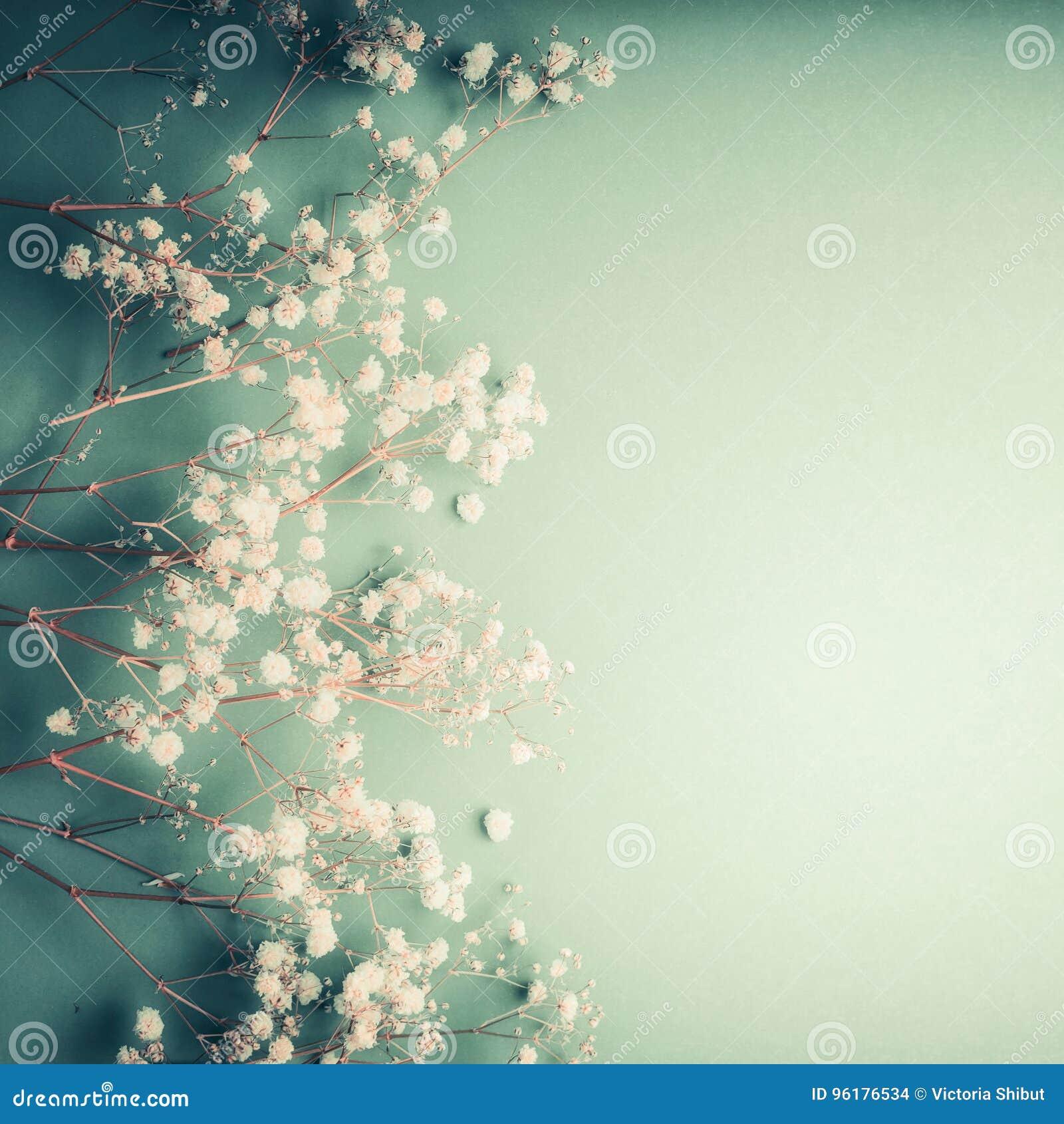 Det härliga blom- hälsningkortet med den lilla vita gypsophilaen blommar på turkosbakgrund, nätt blom- gräns