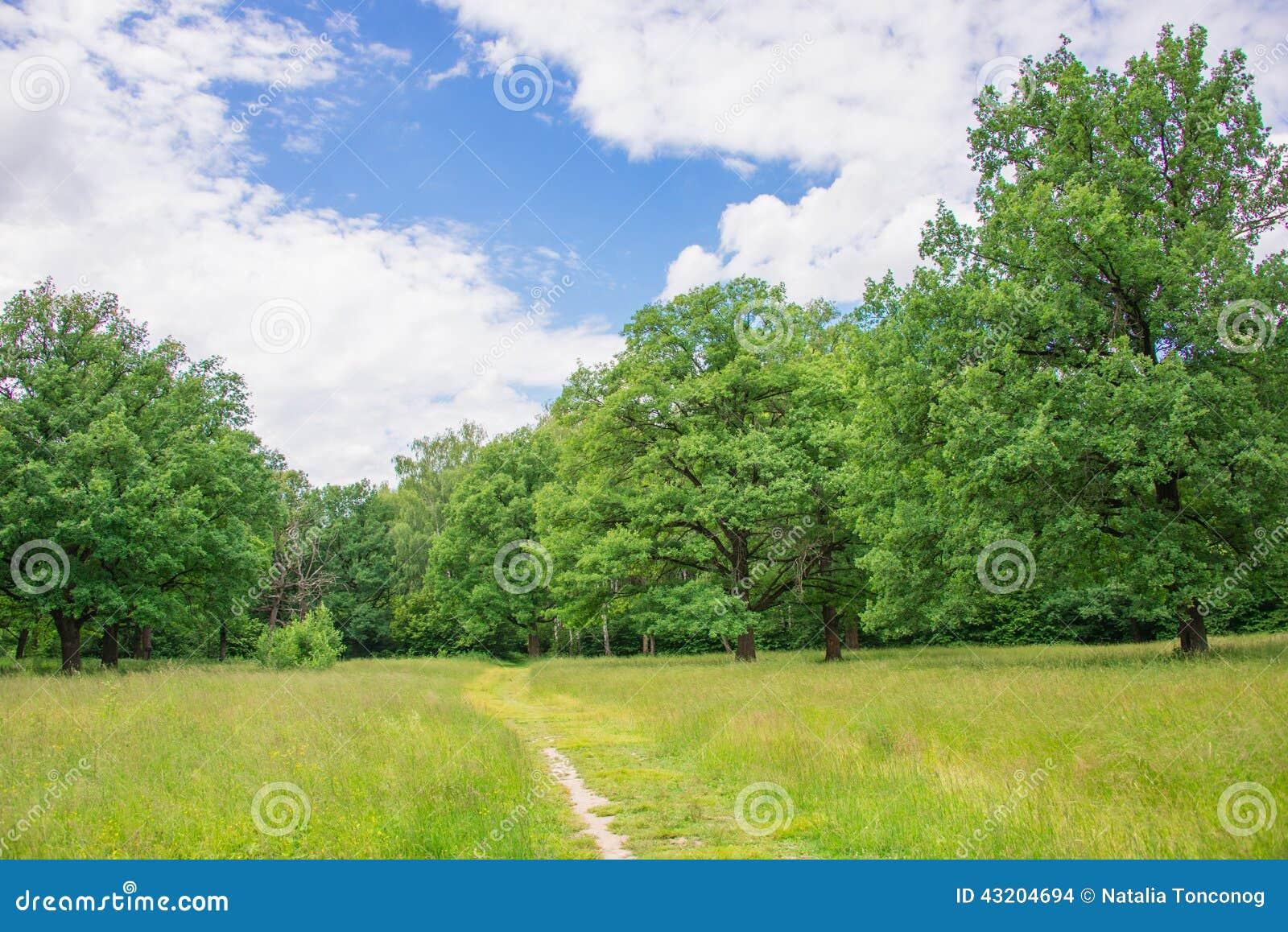 Download Det härligt landskap arkivfoto. Bild av mång, solljus - 43204694