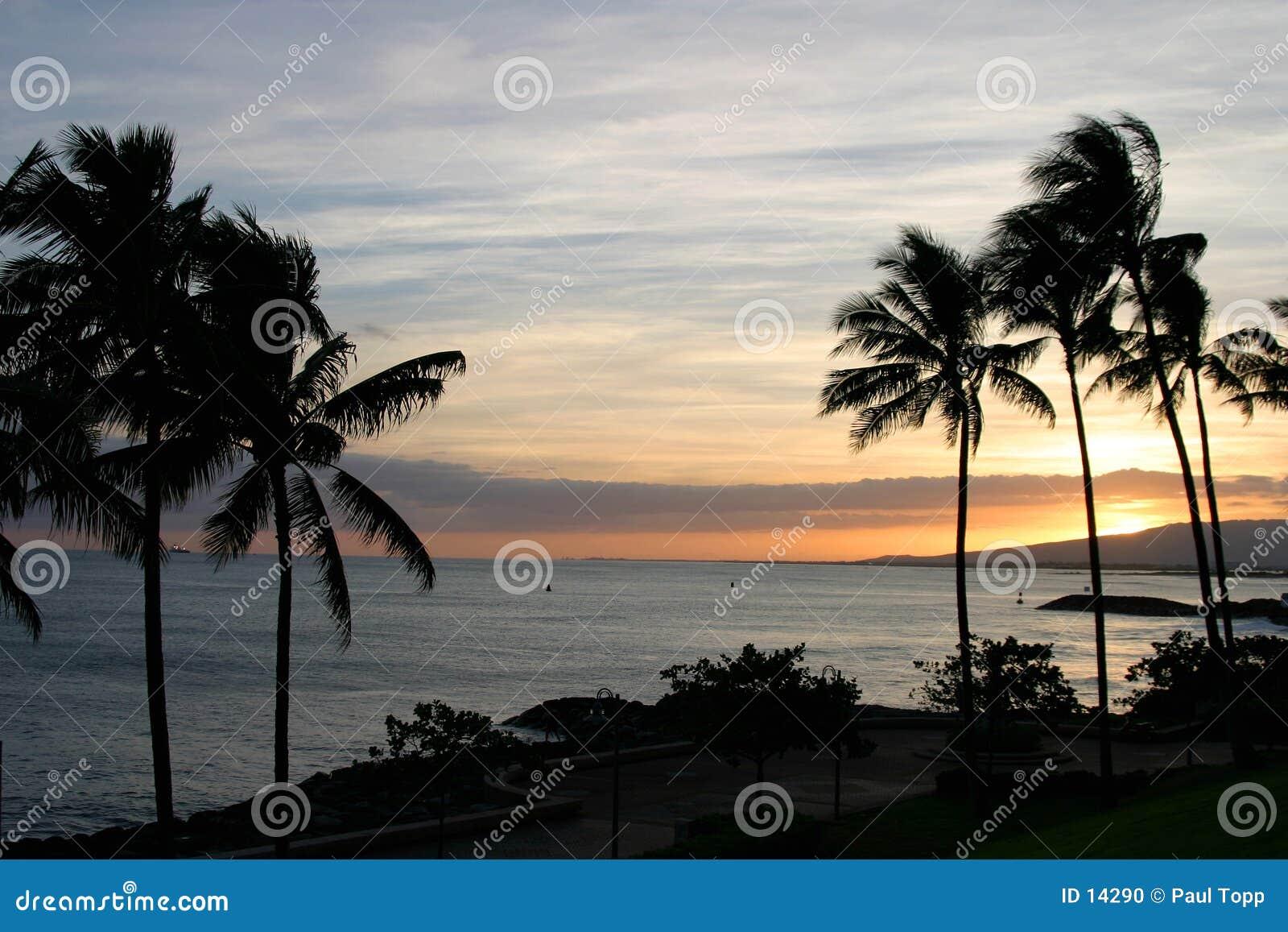 Det hawaii hav gömma i handflatan skysolnedgångtrees