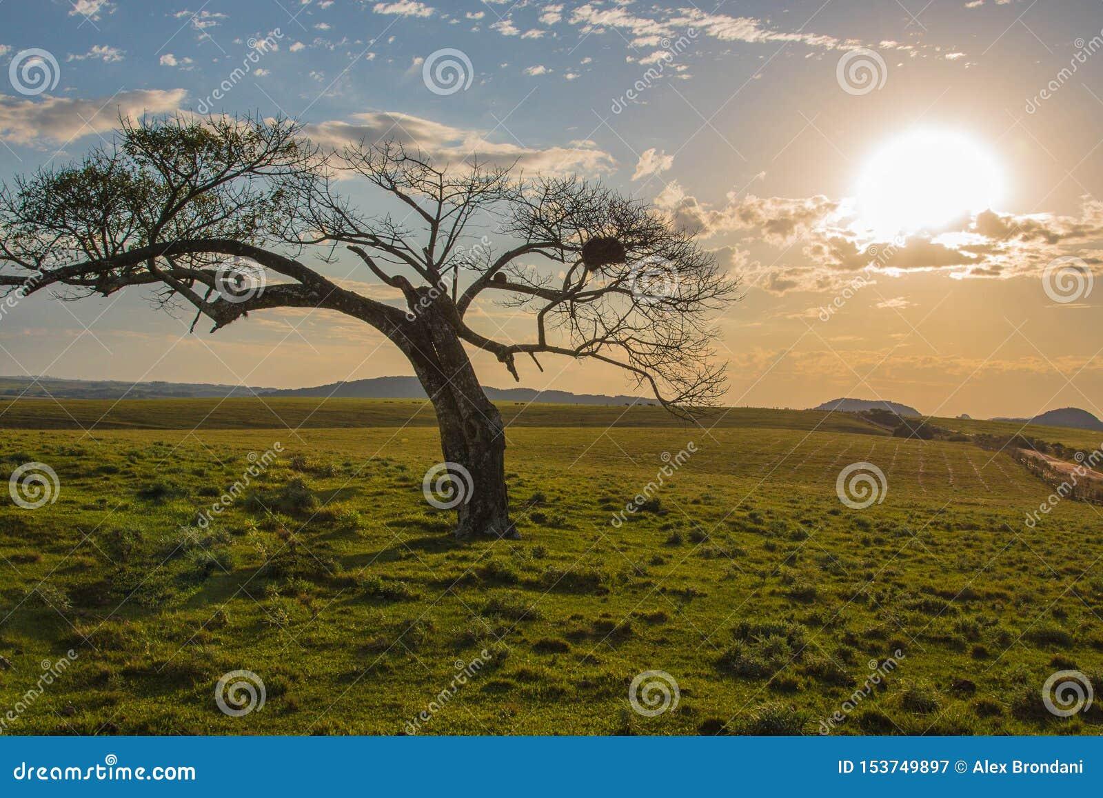 Det magiska skymningträdet och solnedgången