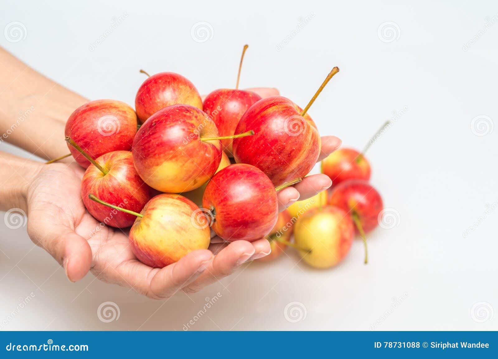 Det röda äpplet växer i hand