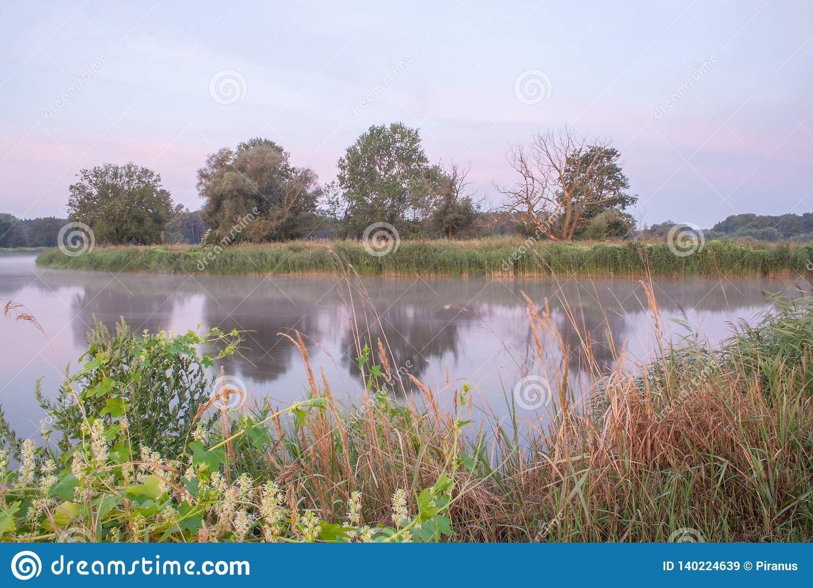 Det Rogalin landskapet parkerar - gamla ekar på bankerna av floden i dimma för soluppgång