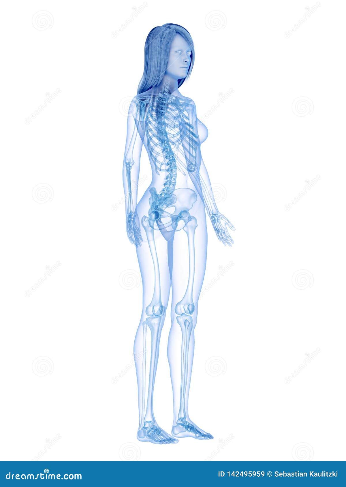 Det skelett- systemet