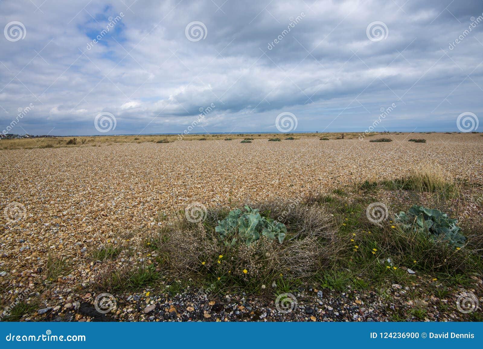Det största området för wordl` s av singeln - Dungeness, Kent, England