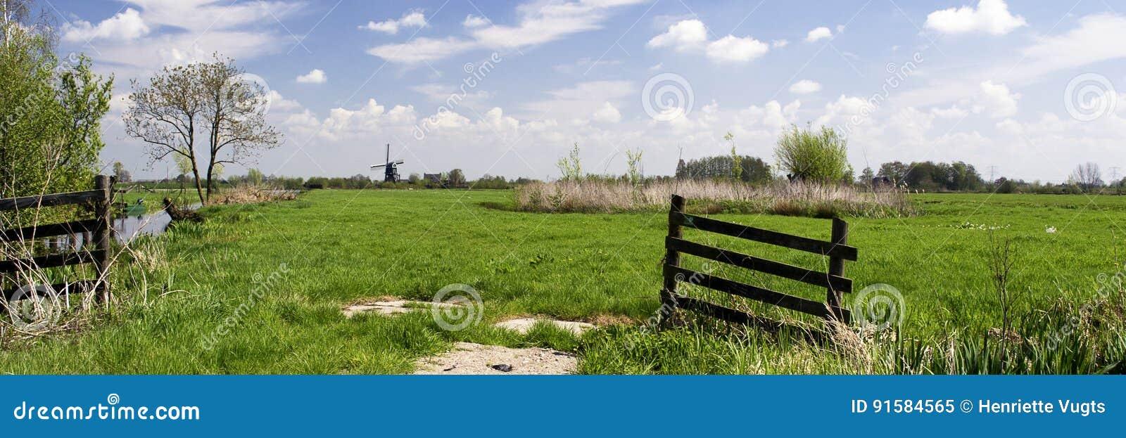 Det typiska holländska landskapet med ängar, trästaket, maler, grönt gräs, blå himmel, vit fördunklar