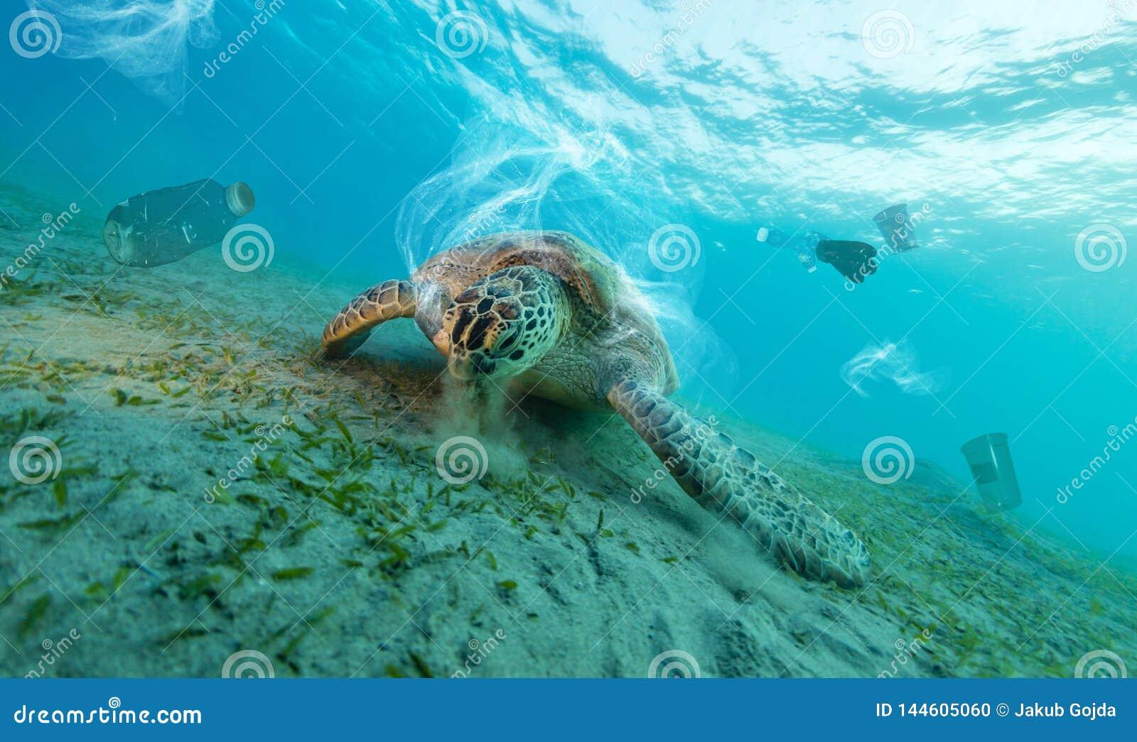 Det undervattens- globala problemet med plast- rackar ner på