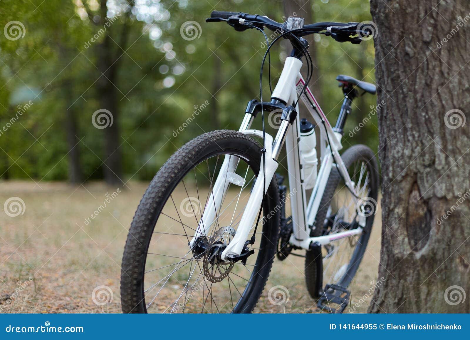 Det vita cykelanseendet, i övergett, parkerar Älskvärd dag, tidig höst eller sommar, melankoliskt lugna lynne, blå atmosfär Morgo