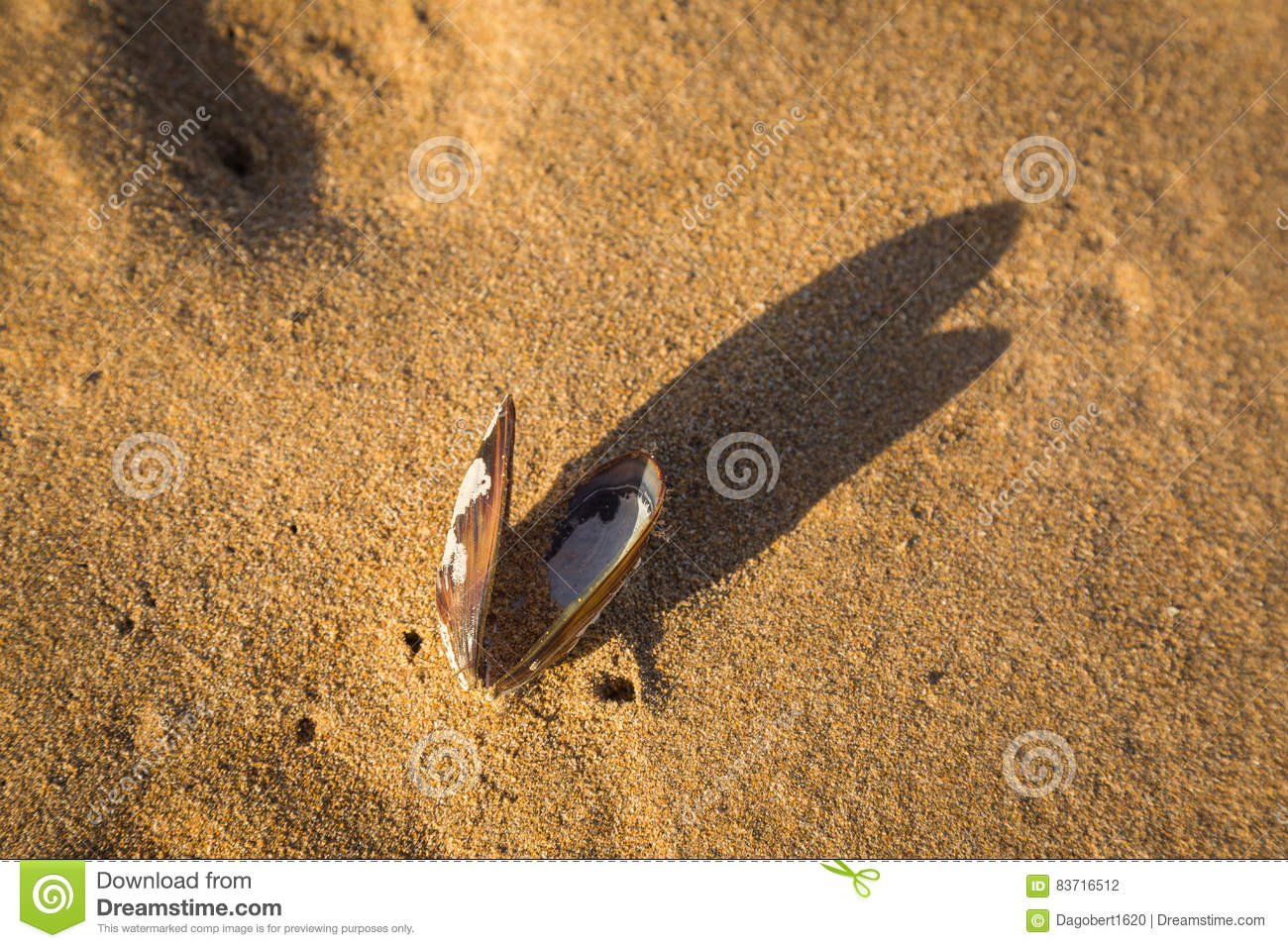 Detail From The Beach In Sidi Ifni Stock Photo