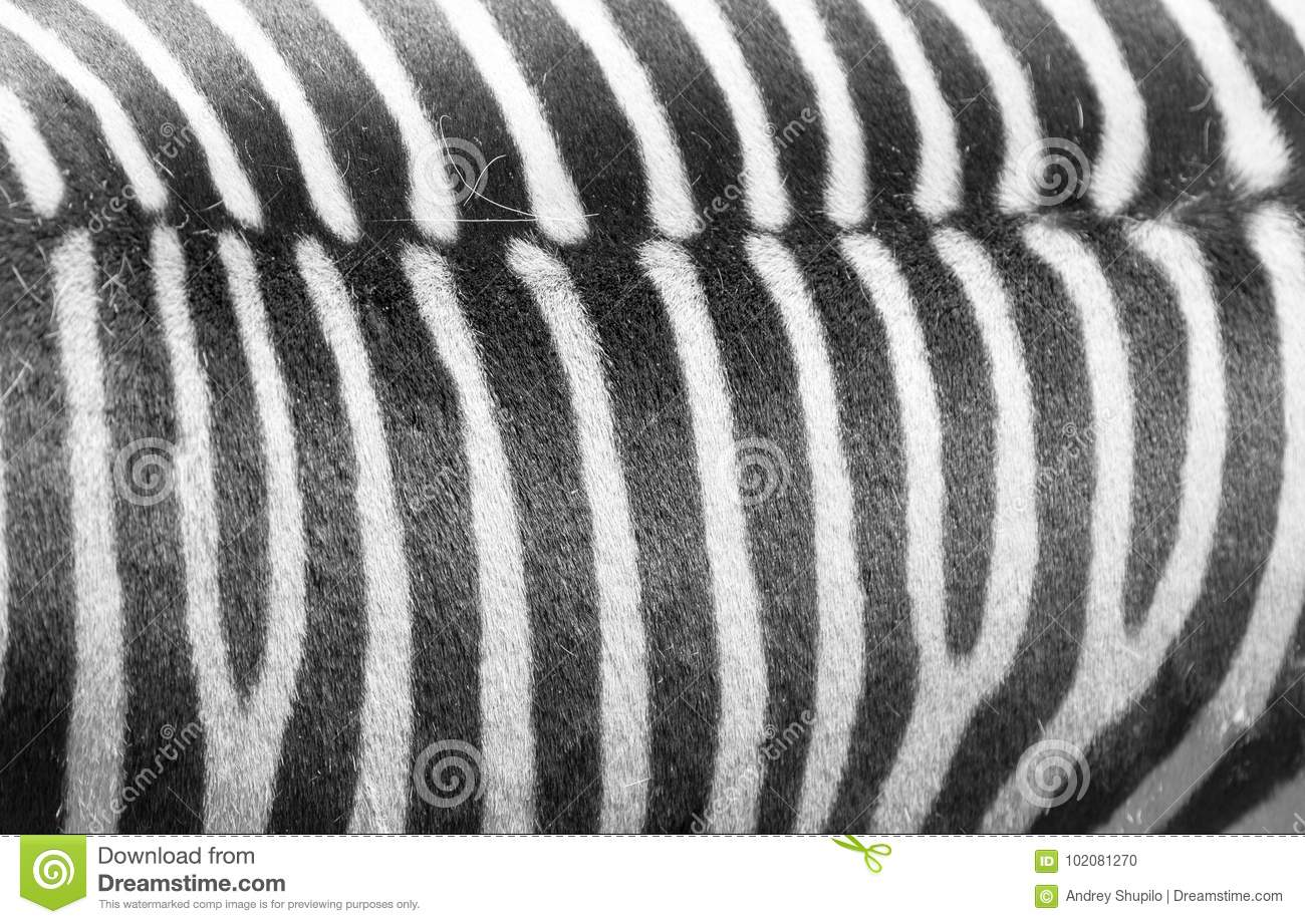 black and white stripes1jpg - photo #31