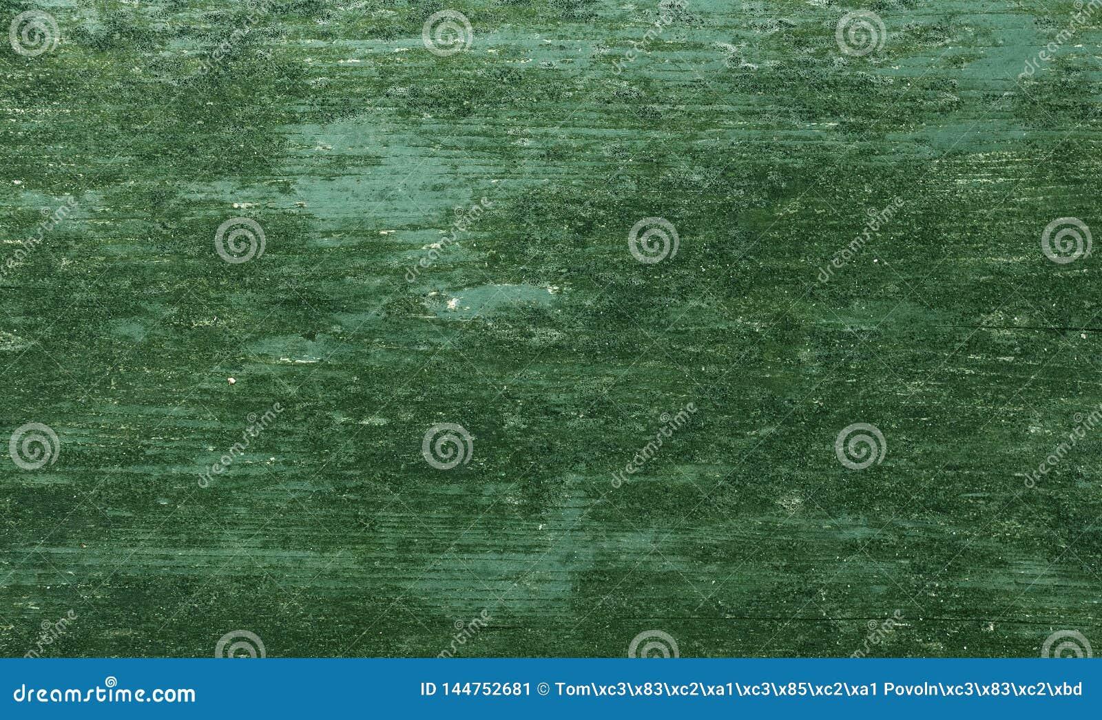 Detail des Mooses und der Flechte auf hölzerner lackierter Oberfläche