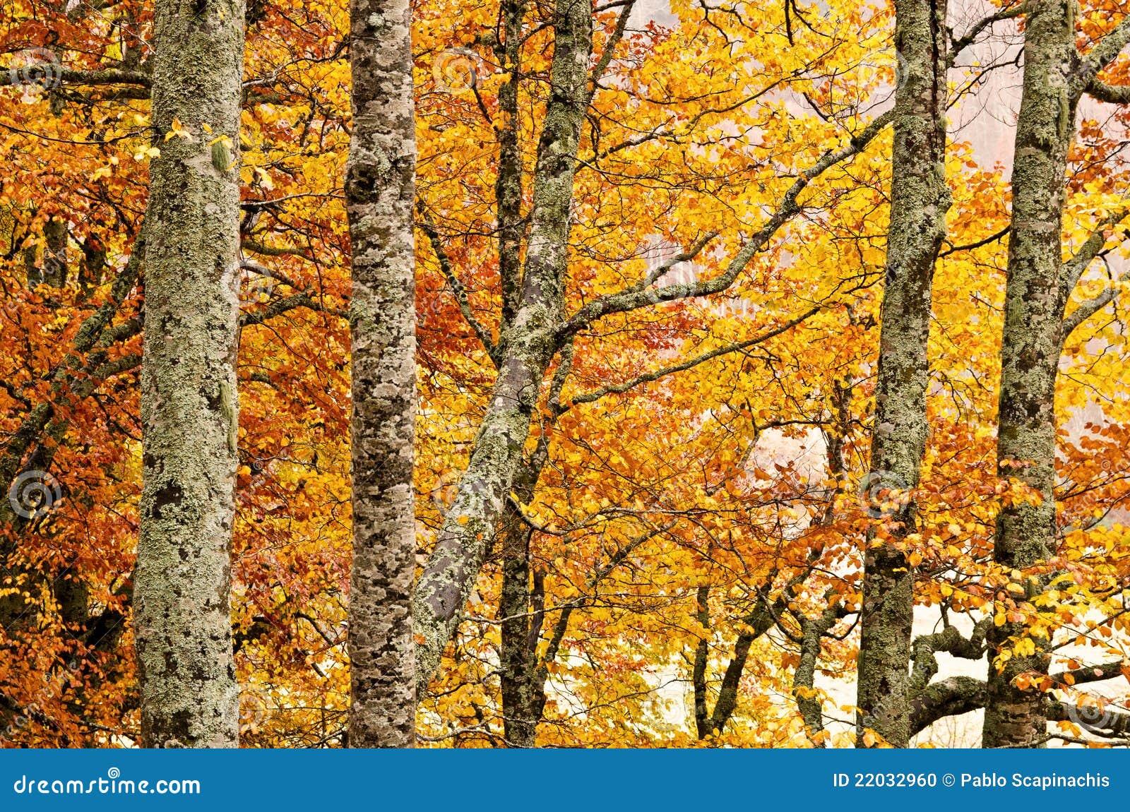 Detail des Waldes im Herbst