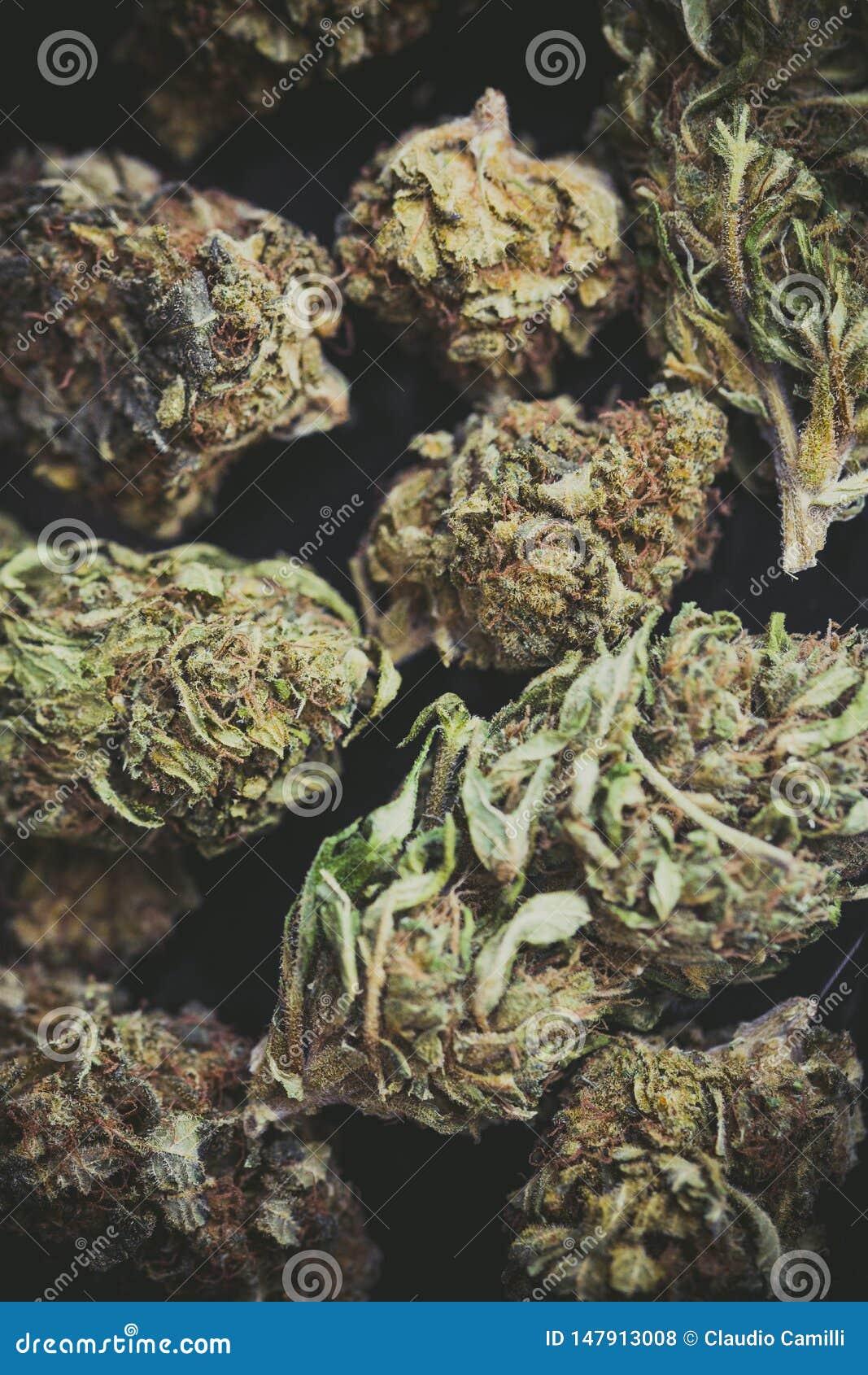 Detail einer Blume der Marihuanaknospen