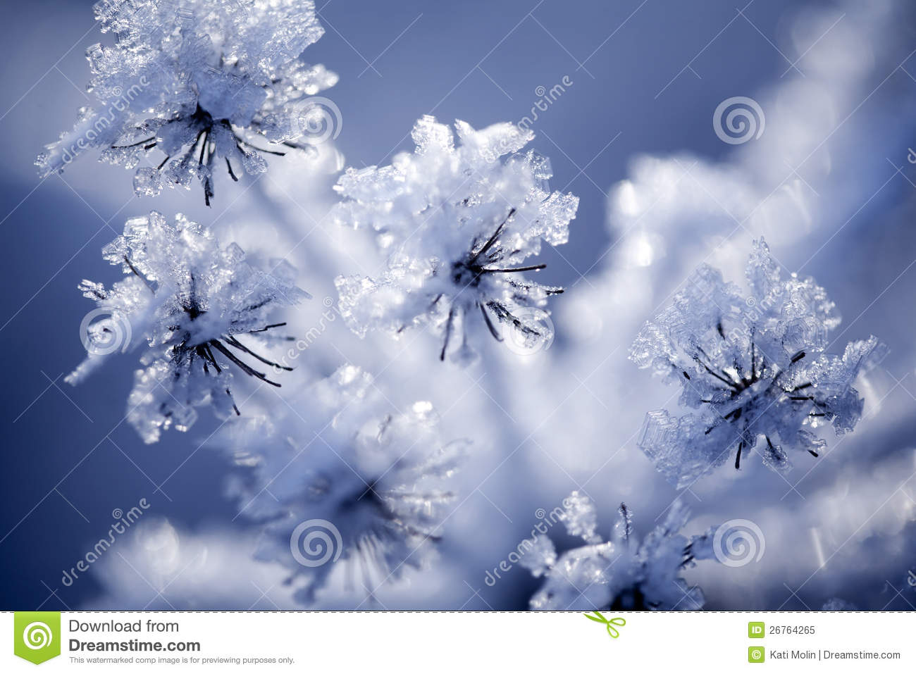 Detail Frozen Flower Royalty Free Stock Image