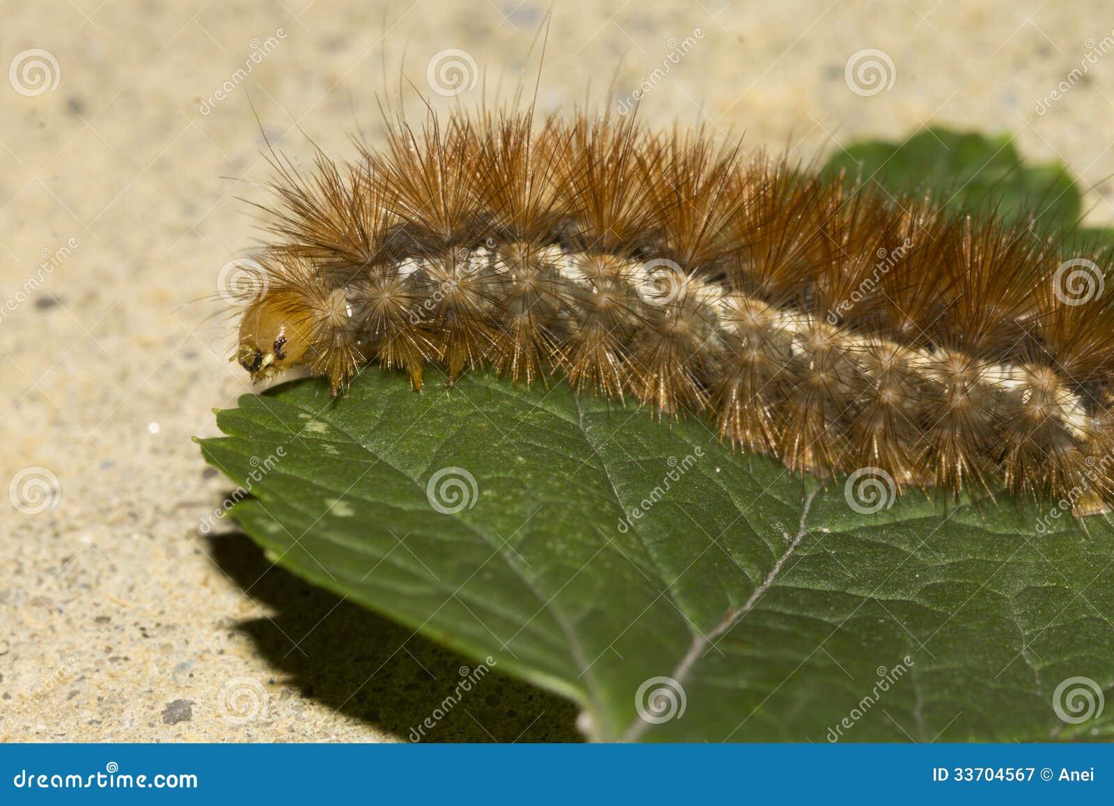 Green caterpillar orange strip 9