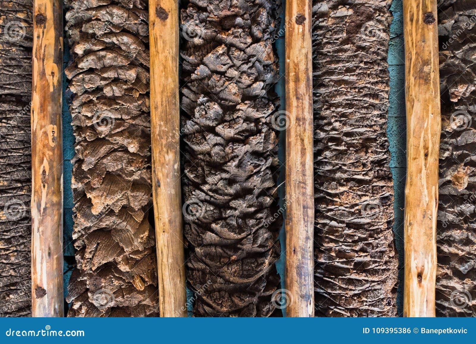 Dubai To See 1st Palm Tree Timber Plant